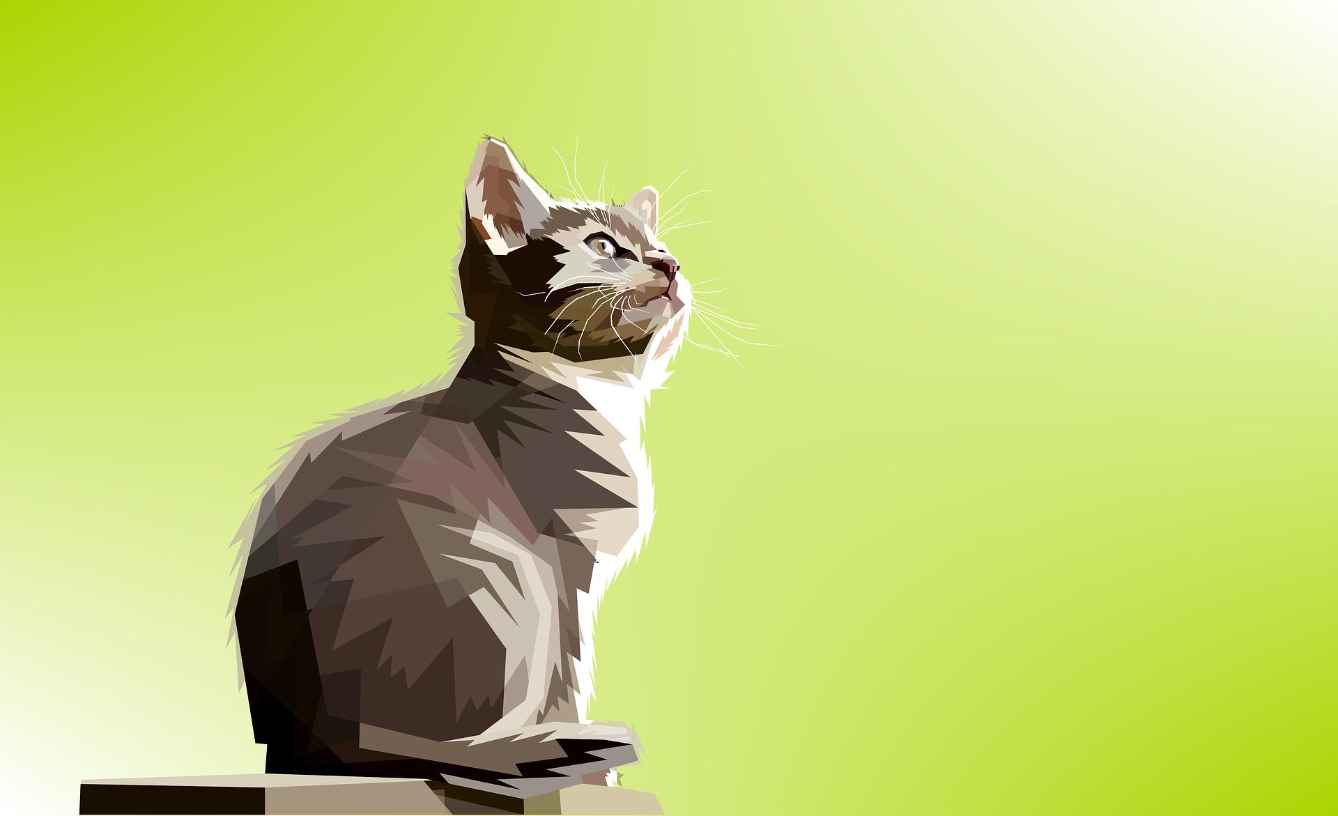 Cat 1920x1171