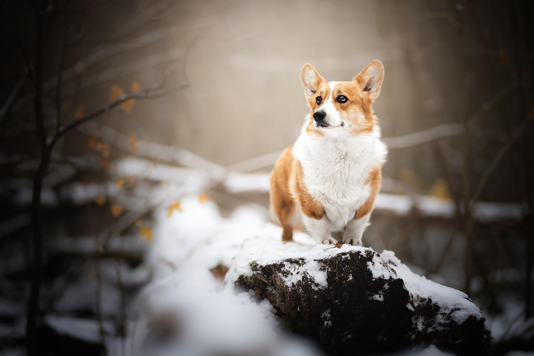 Dog Pet 2034x1356