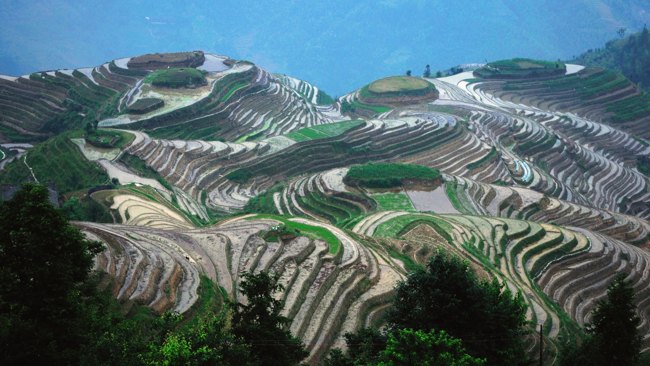 Terraced Field Landscape China 2560x1440