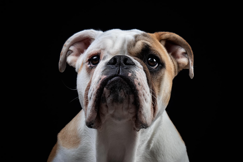 Dog Pet 3000x2000