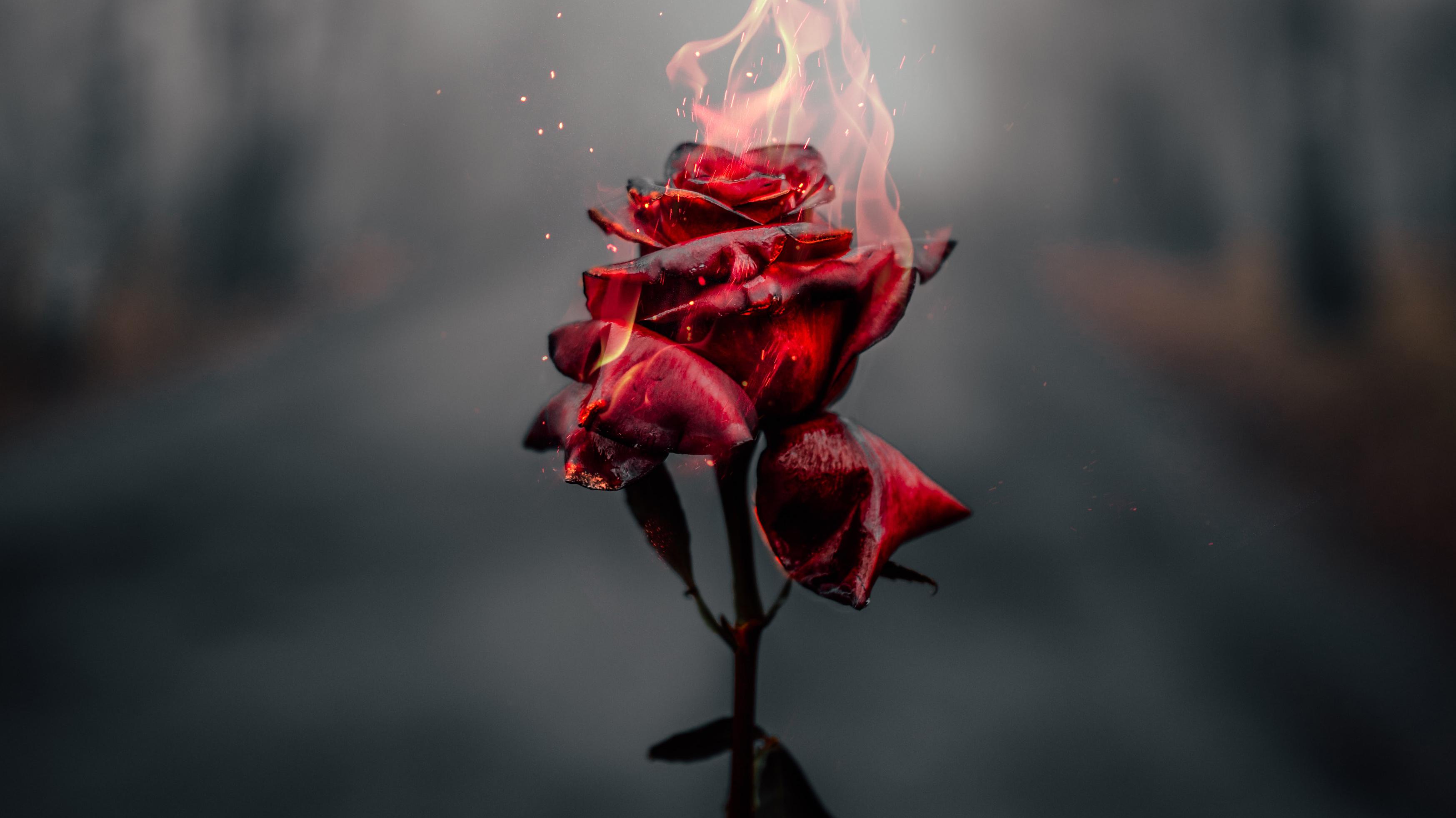 Artistic Rose 3495x1965