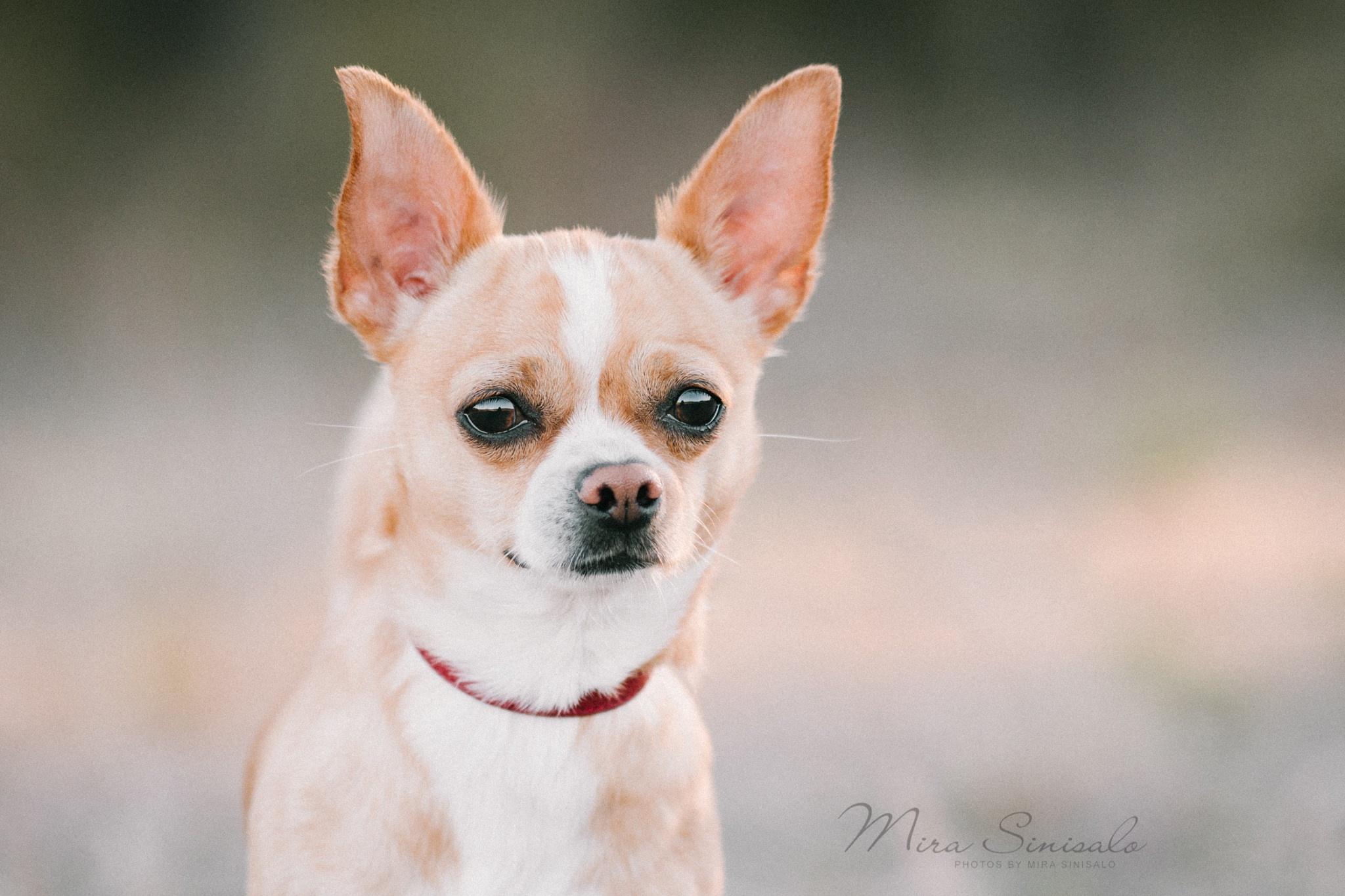 Dog Pet 2048x1365