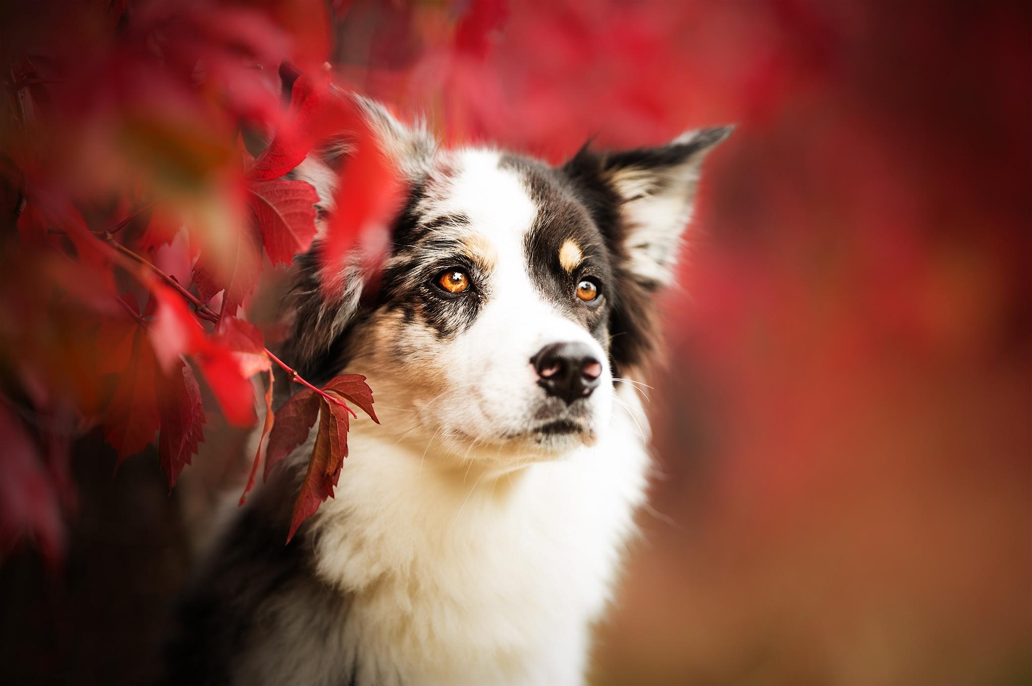 Dog Pet 2048x1363
