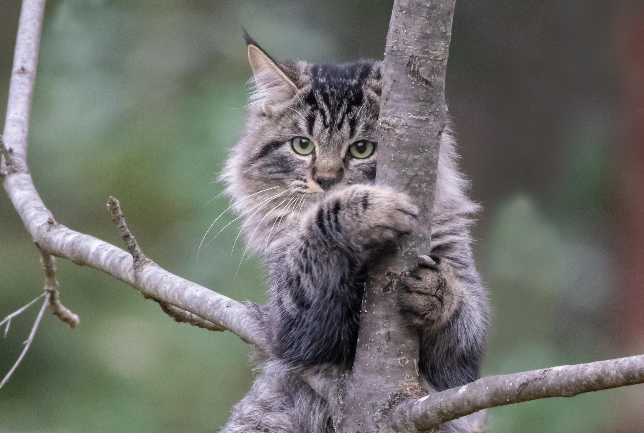 Cat Pet 2048x1378
