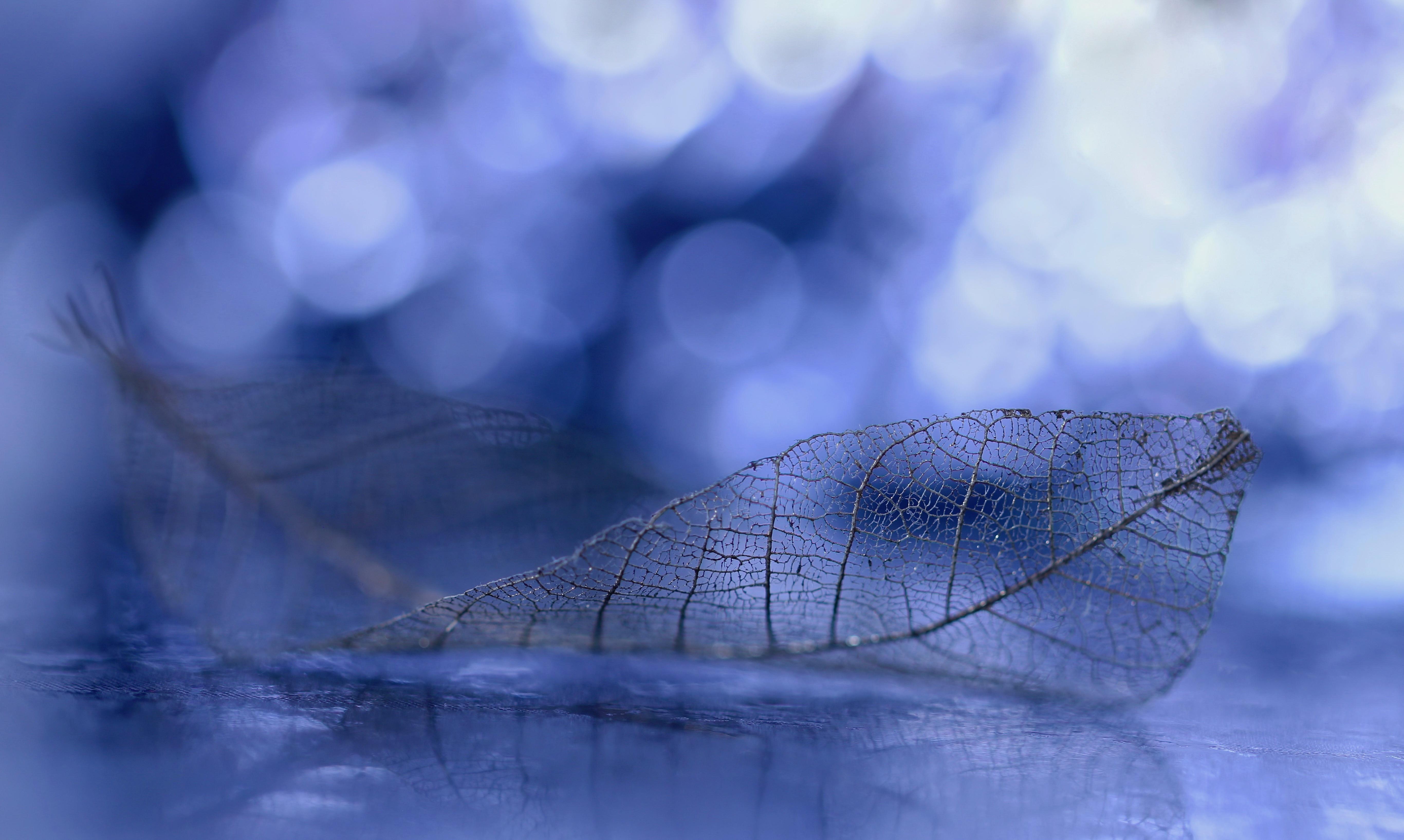 Blue Bokeh 5464x3269