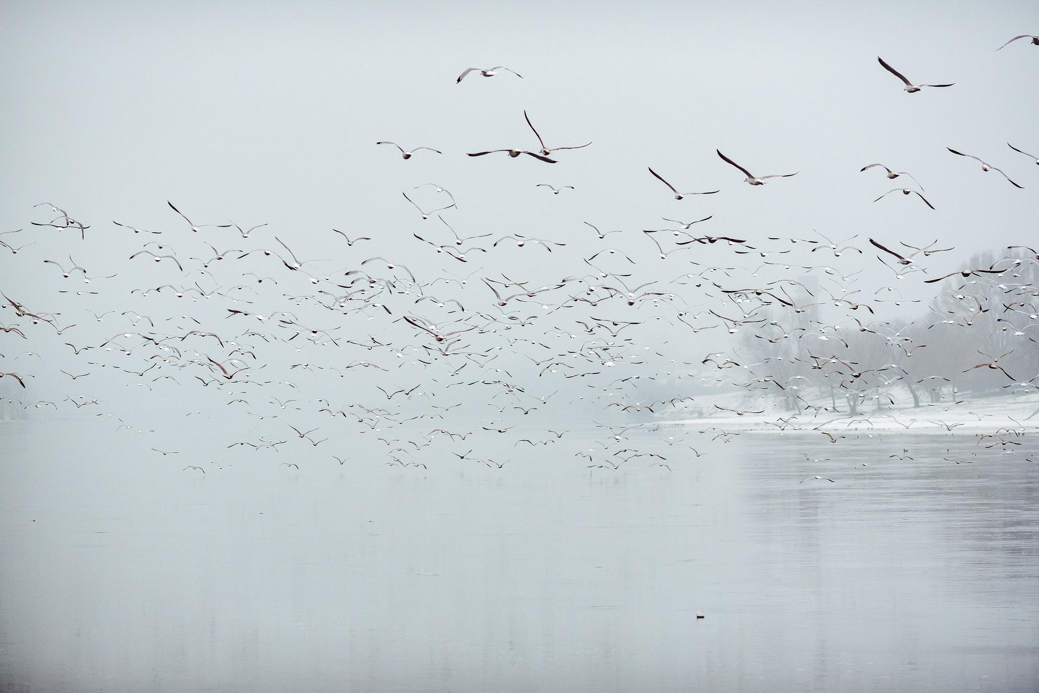 Wildlife Flock Of Birds 2048x1367