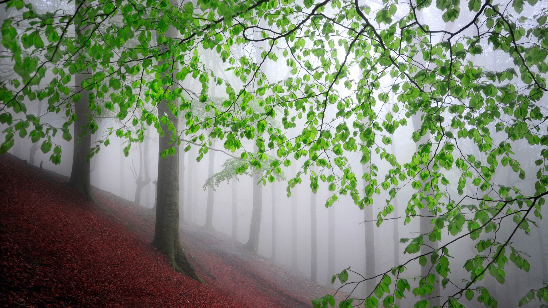 Nature Trees Leaves Mist Tree Trunk Branch Forest Hill Landscape Plants Outdoors 1920x1080
