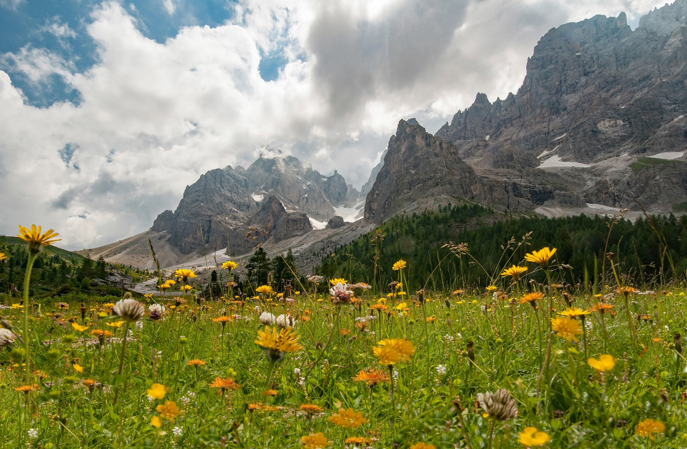 Summer Flower Alps Meadow Dolomites 2200x1438