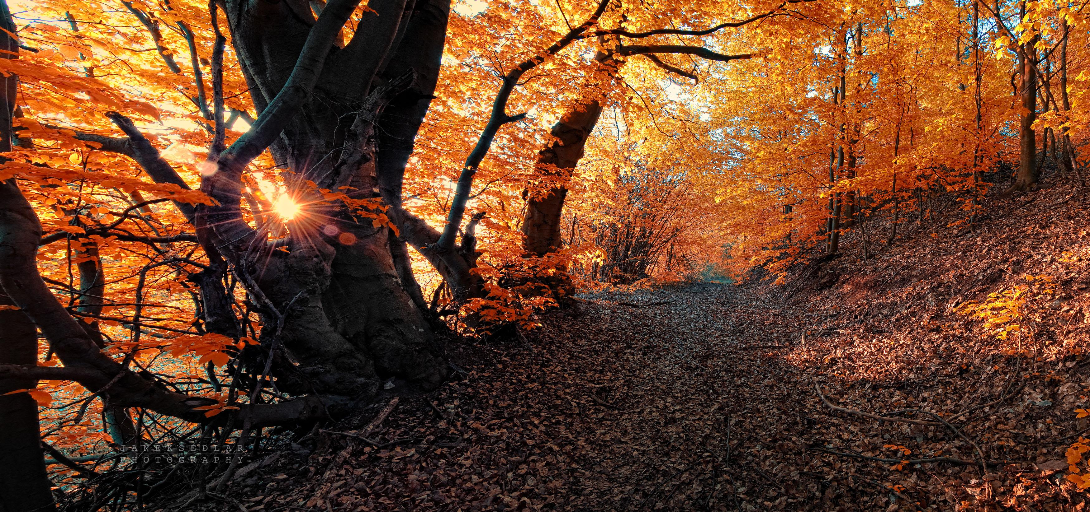 Fall Foliage Forest Path Sunset Orange Color 3500x1646