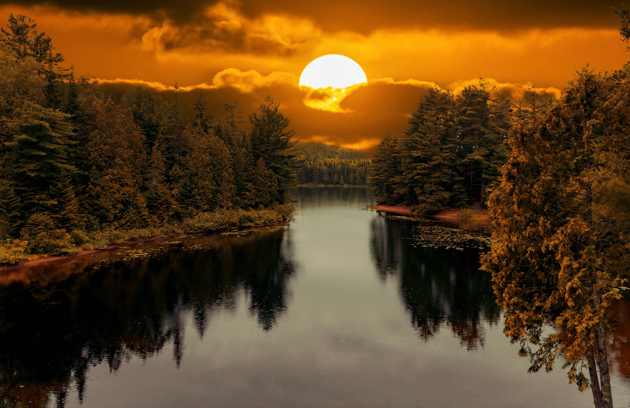 Forest Sun Reflection 2048x1327