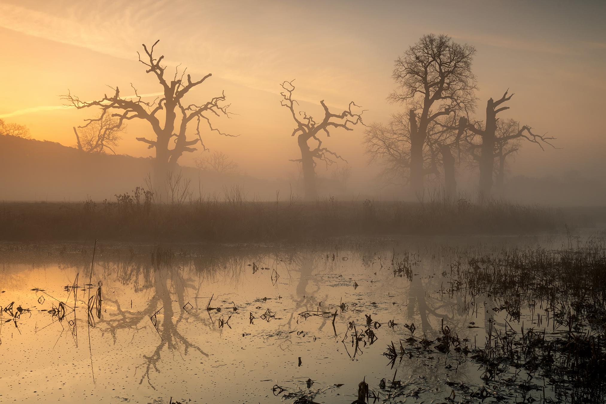 Mist Lake Water Winter Outdoors Landscape Sunlight Swamp Sky Photography Dead Trees Morning Sunrise 2025x1350