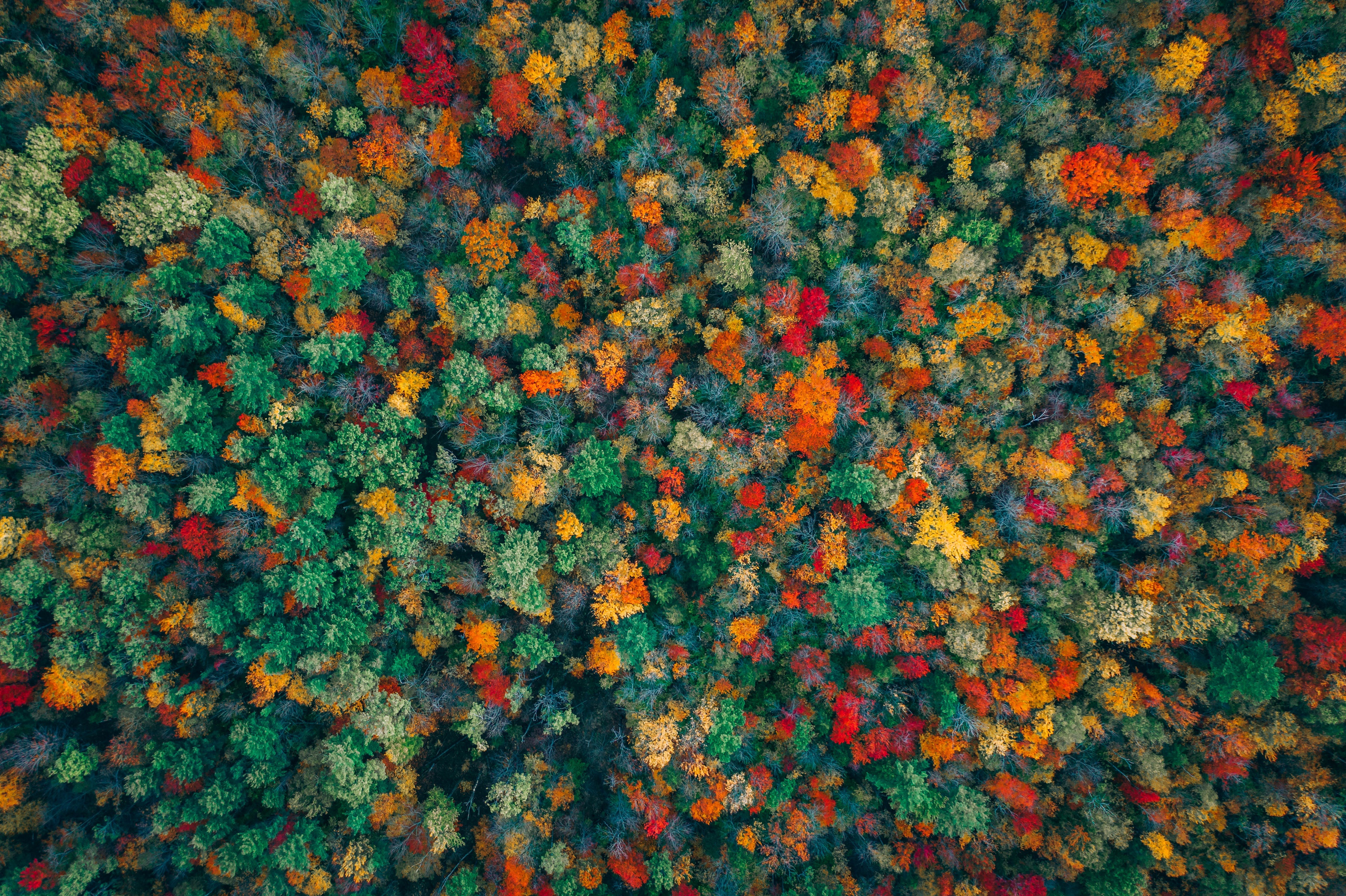 Aerial Forest Nature 3603x2400