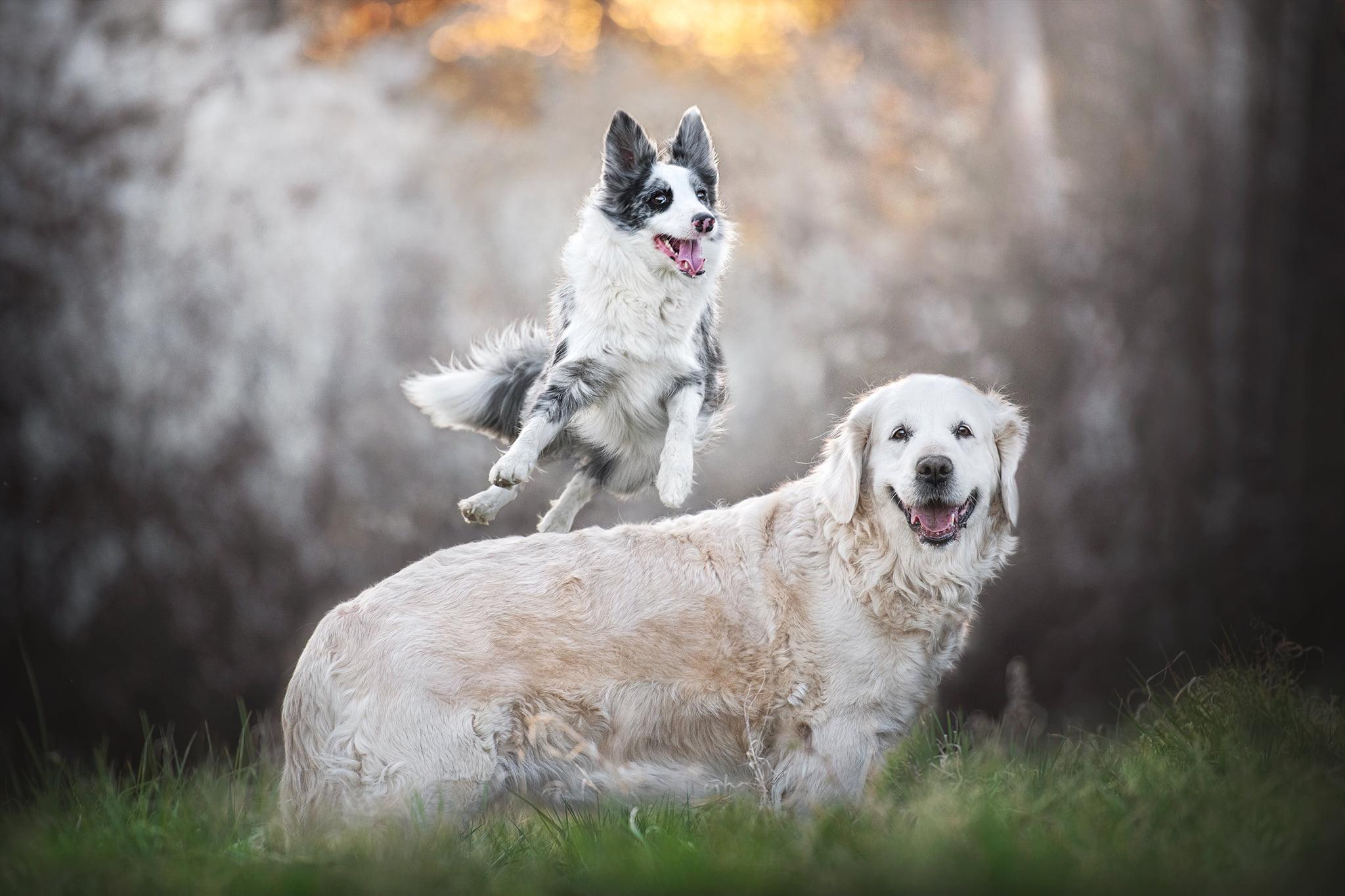 Dog Animals Mammals Outdoors 2048x1365