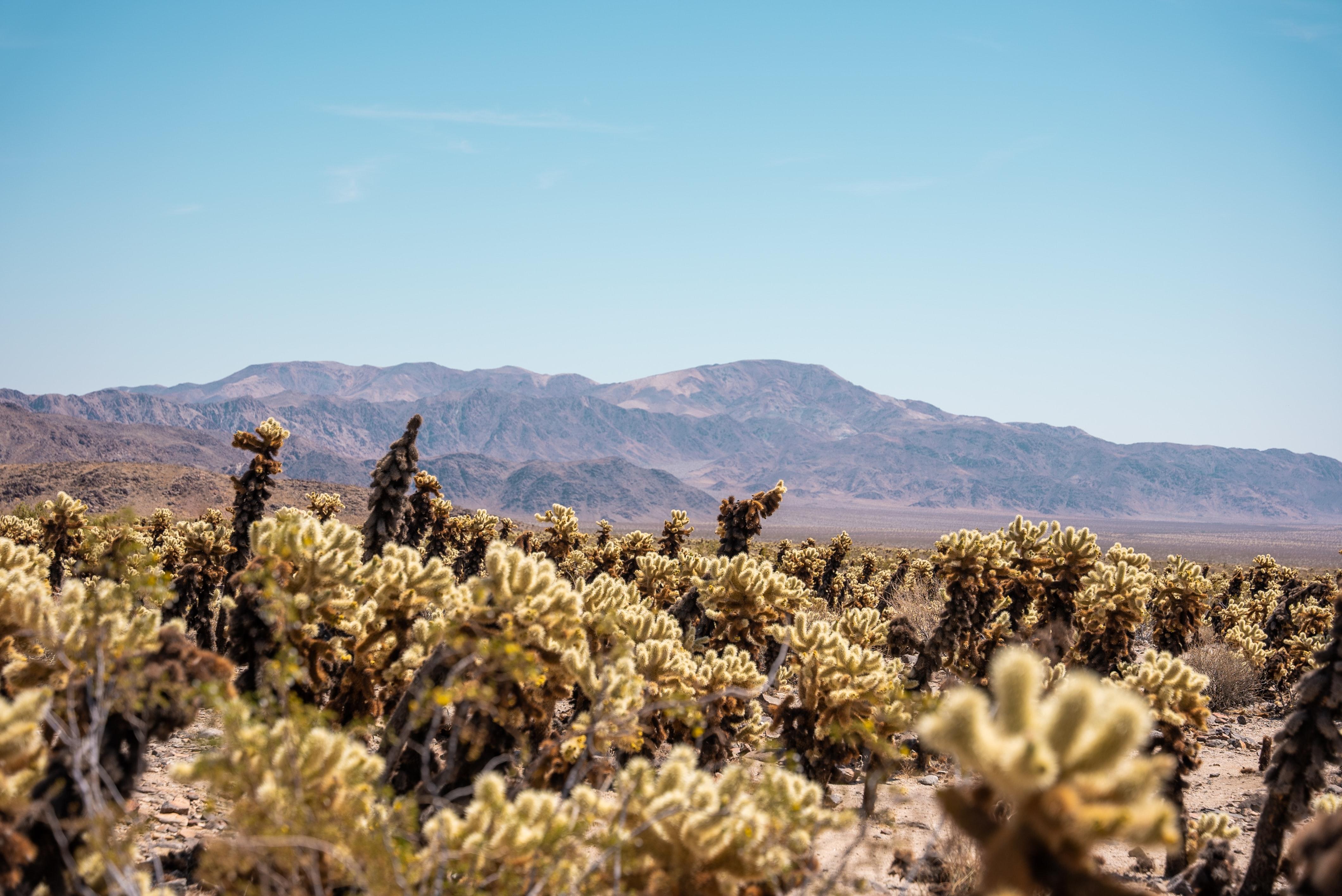 Landscape Nature Desert USA California 4240x2832