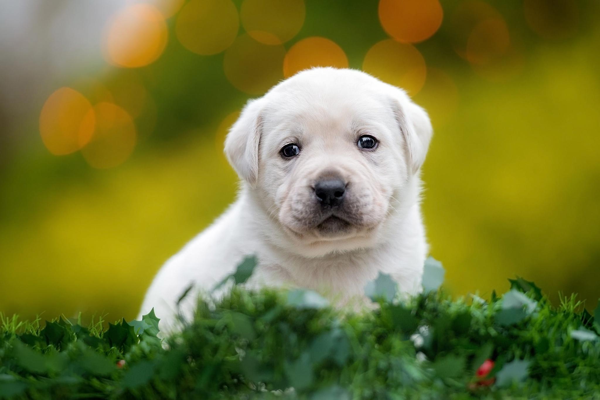 Dog Puppy Pet Baby Animal 2048x1365