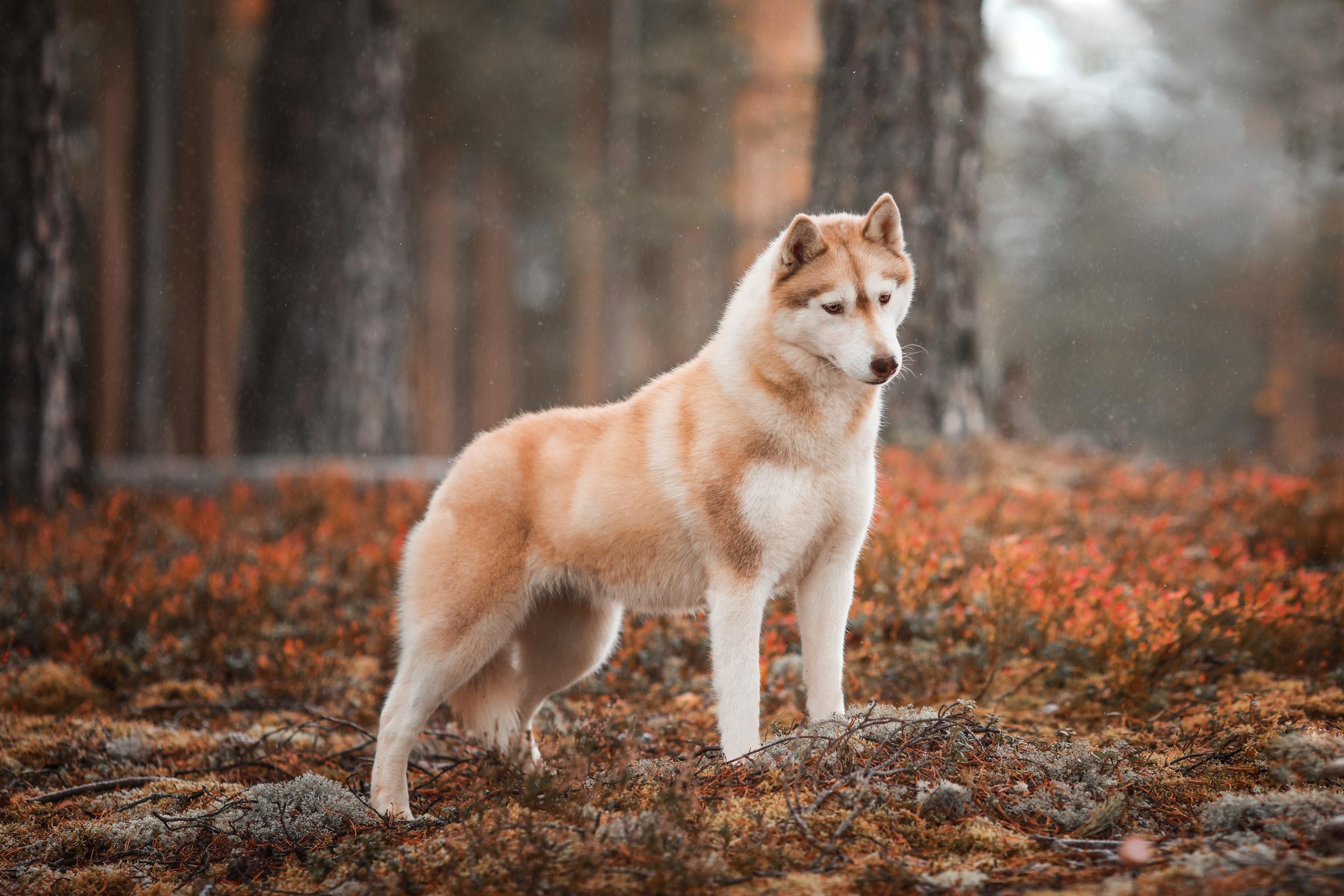 Dog Pet 2500x1667