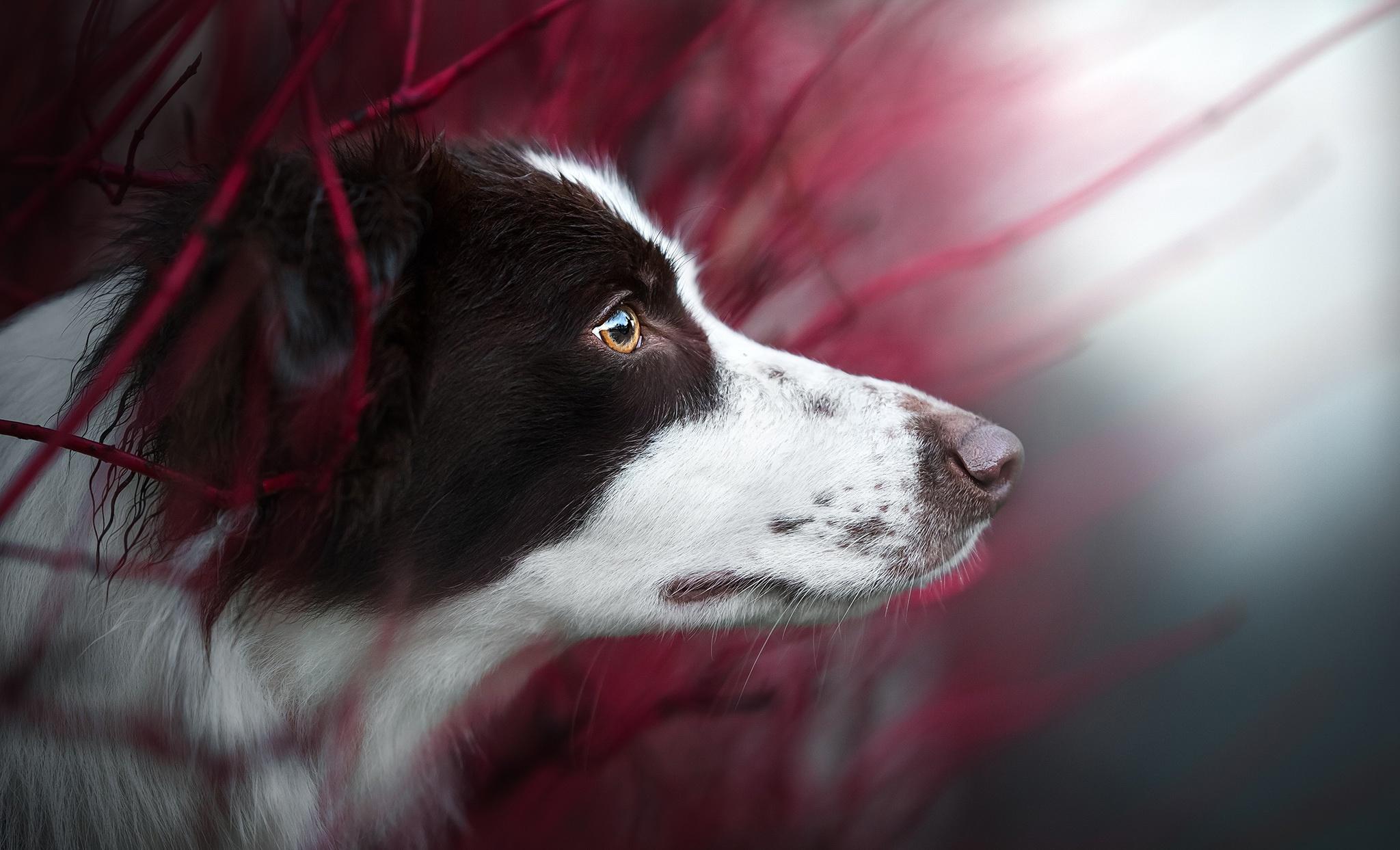 Dog Pet Muzzle 2048x1243