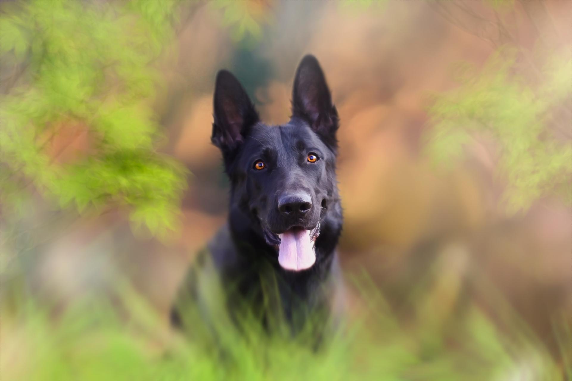 Dog Pet 1920x1280