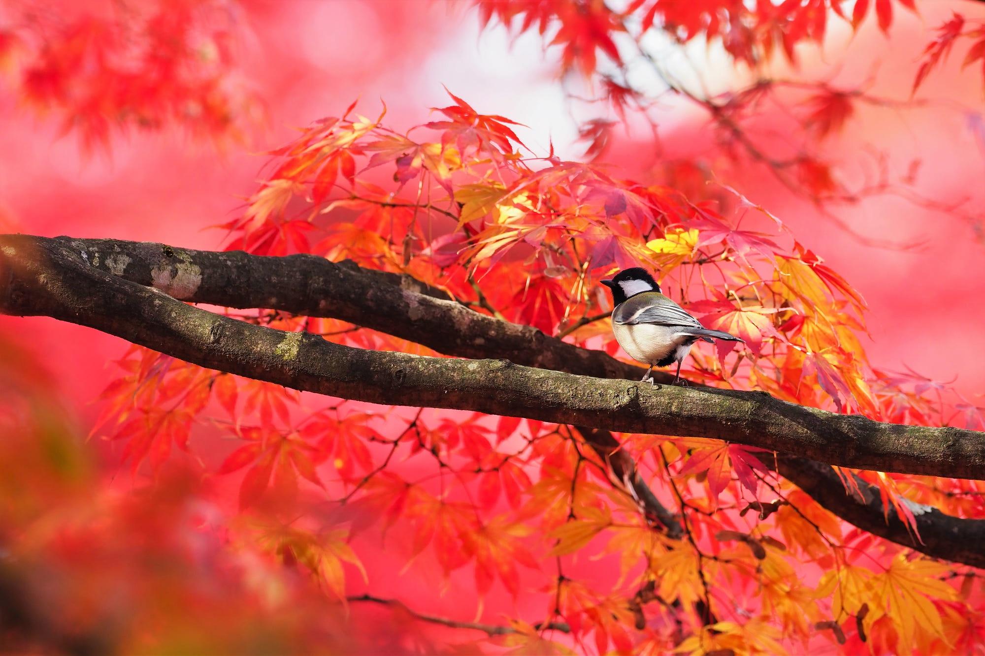 Bird Branch Tree Wildlife 2000x1333