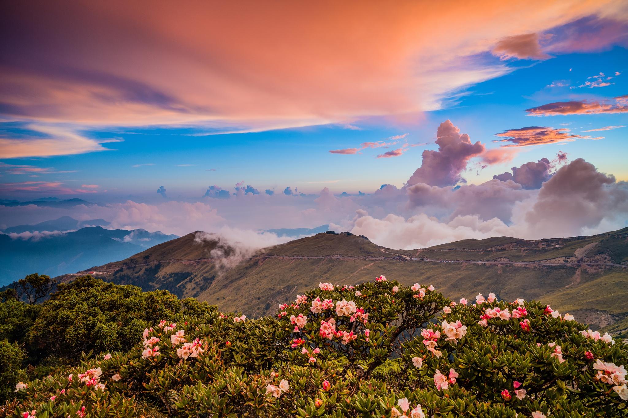 Nature Mountain Flower Cloud 2048x1365