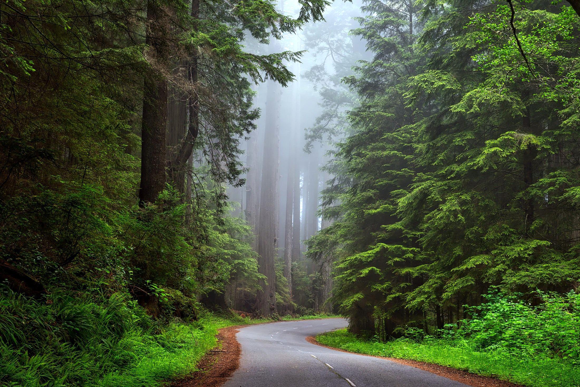 Trees Road 2200x1468