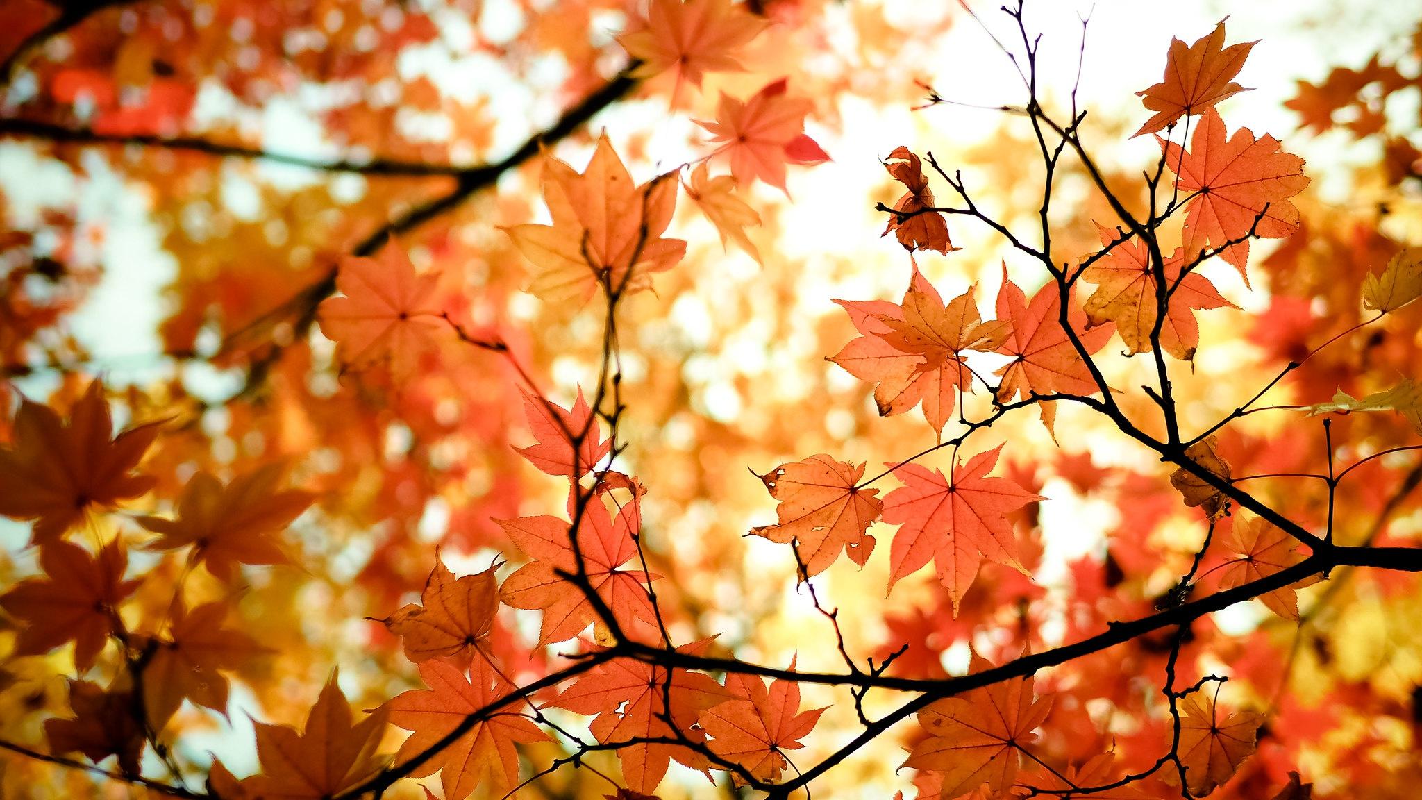 Fall Nature Maple Leaf 2048x1152