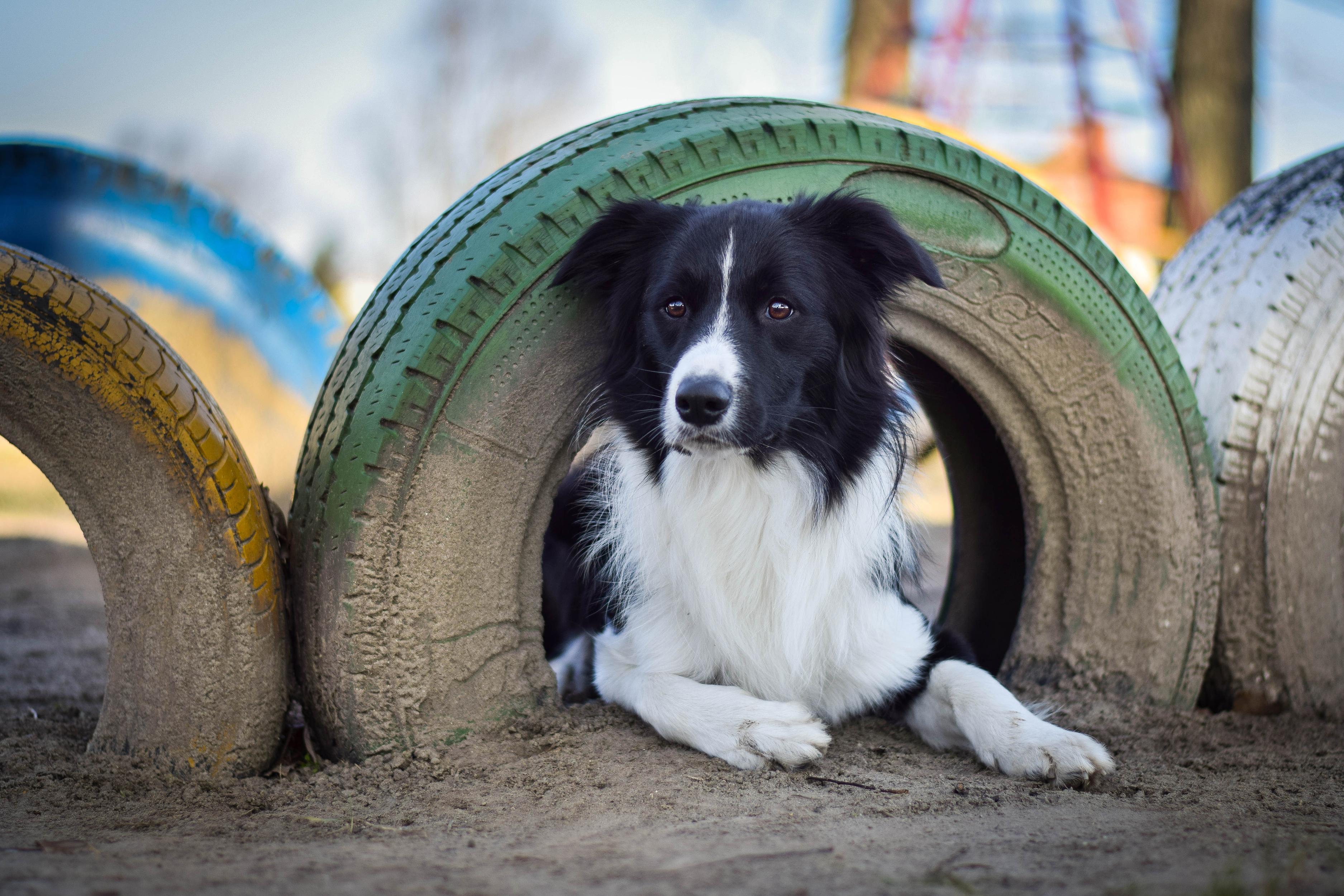 Dog Pet 3750x2500