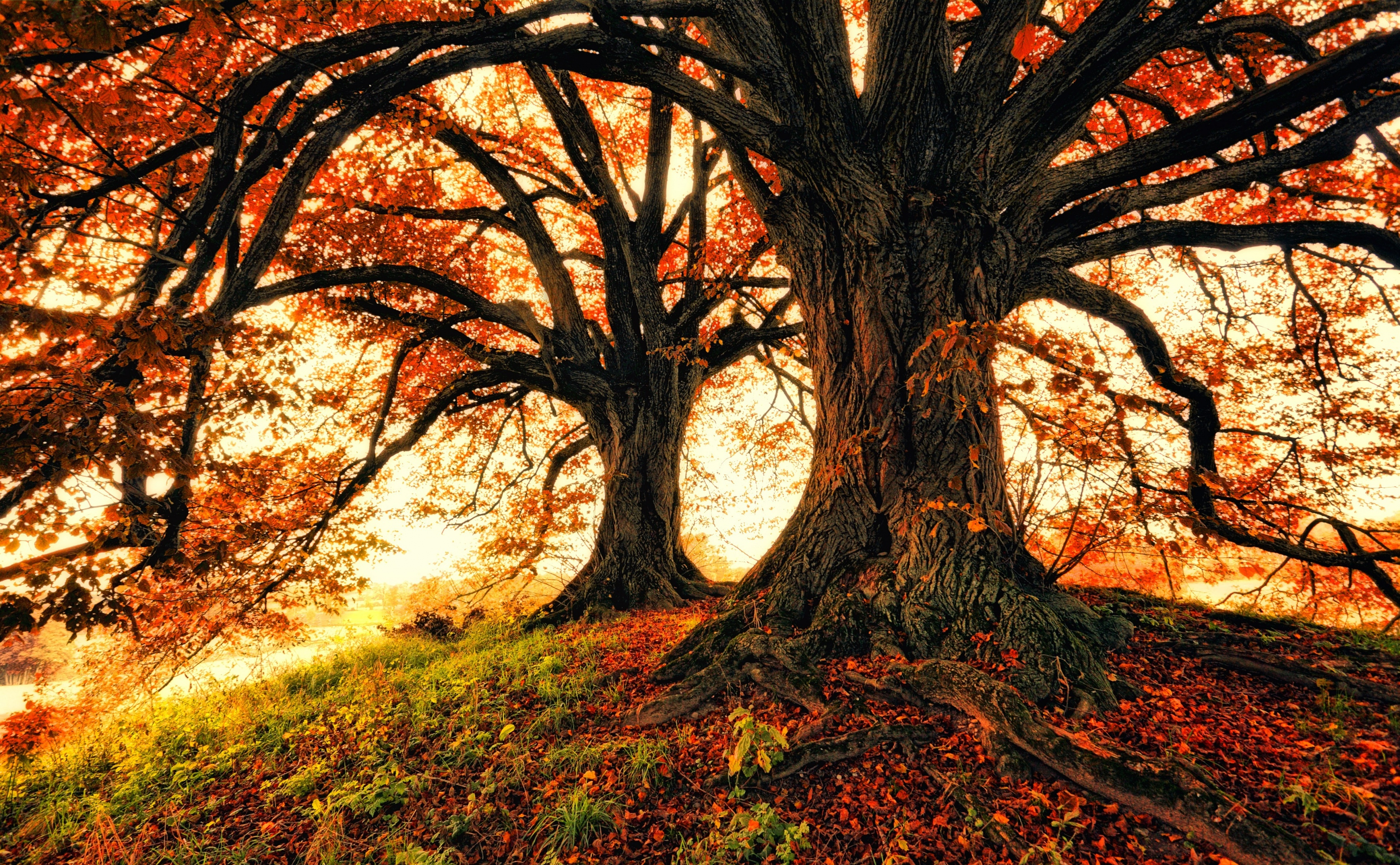 Fall Foliage Oak 3840x2372