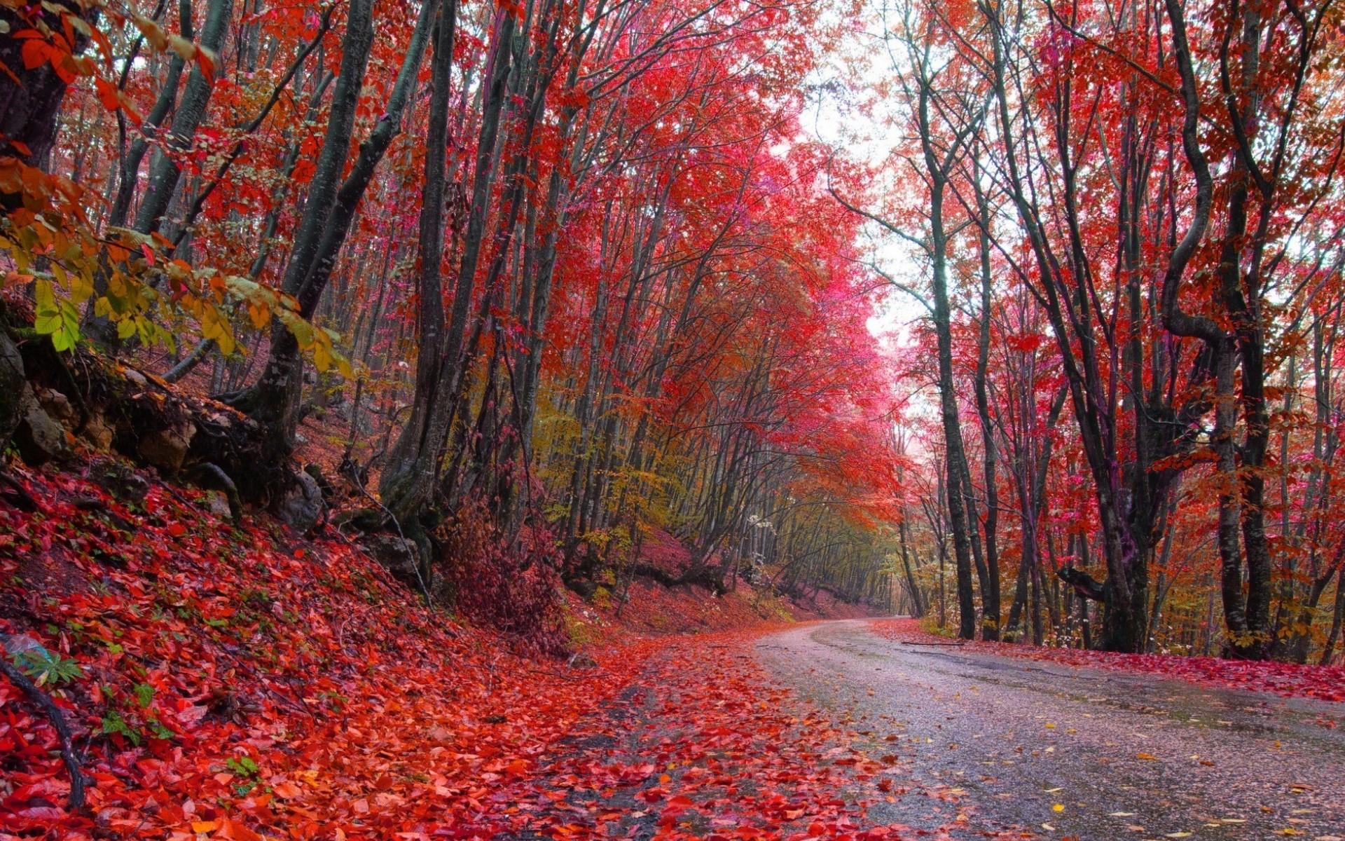 Road Leaf Tree Fall 1920x1200