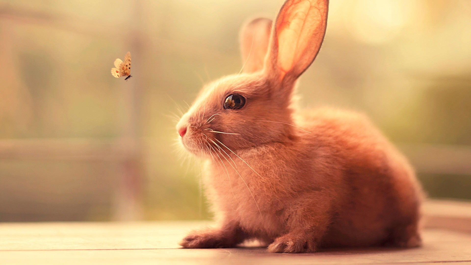 Rabbits Butterfly Animals Nature Insect 1920x1080