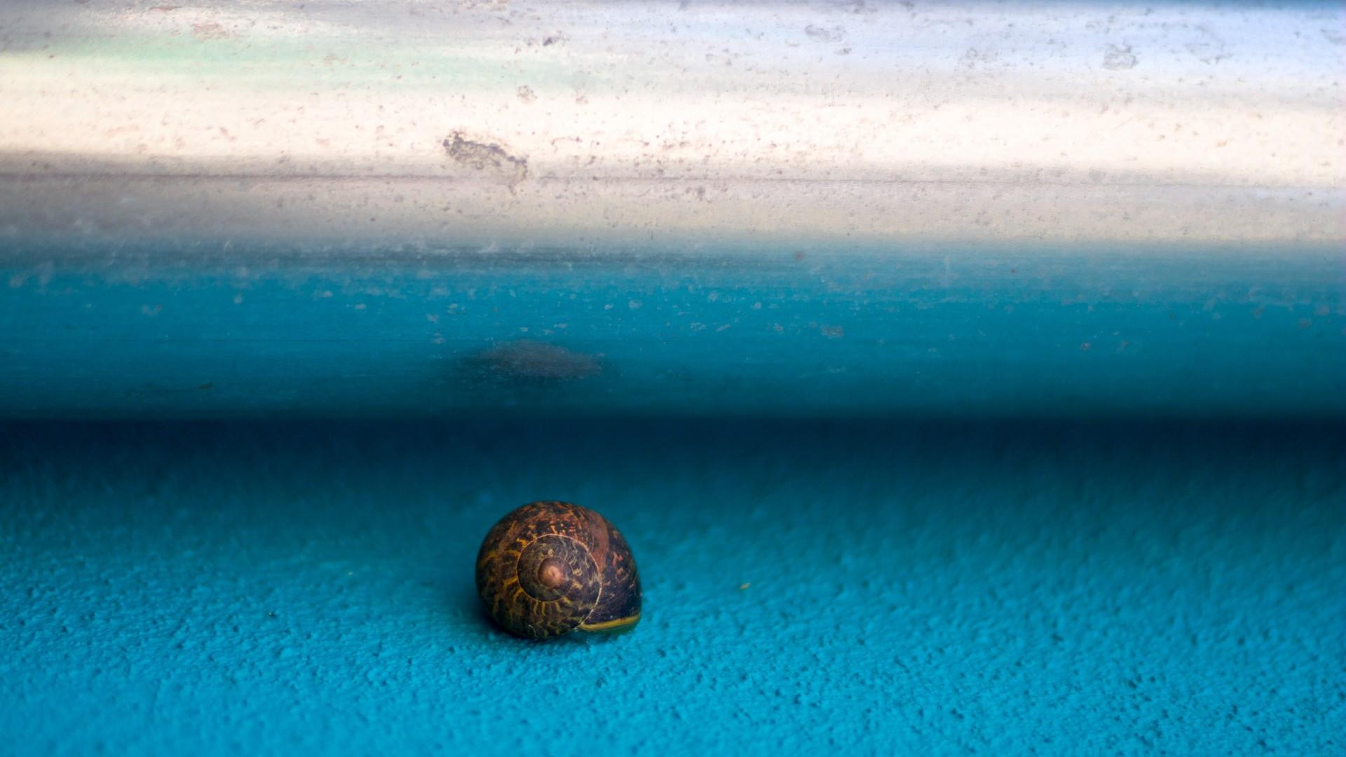 Animal Snail 1920x1080
