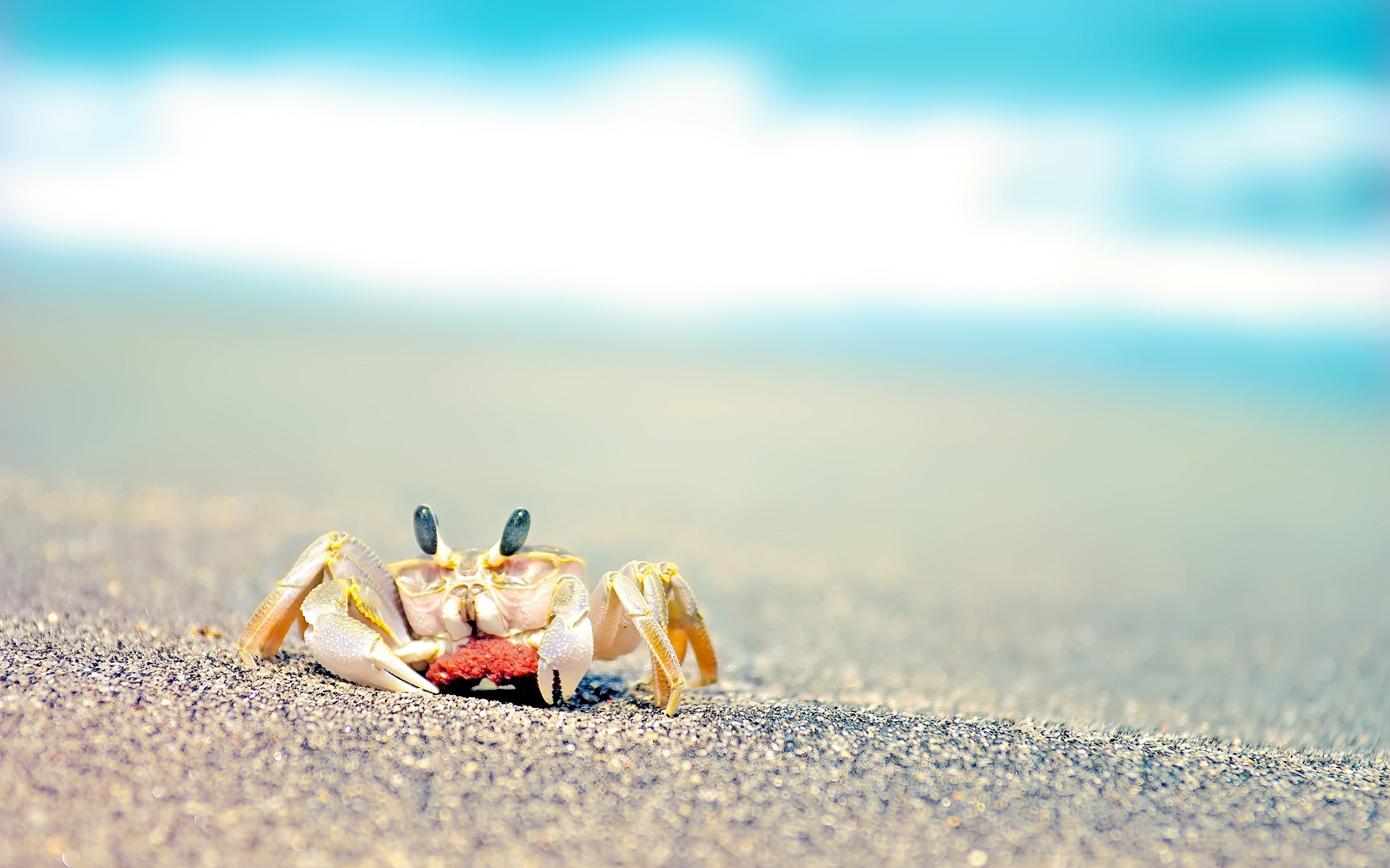 Crab Sand Wave 2560x1600