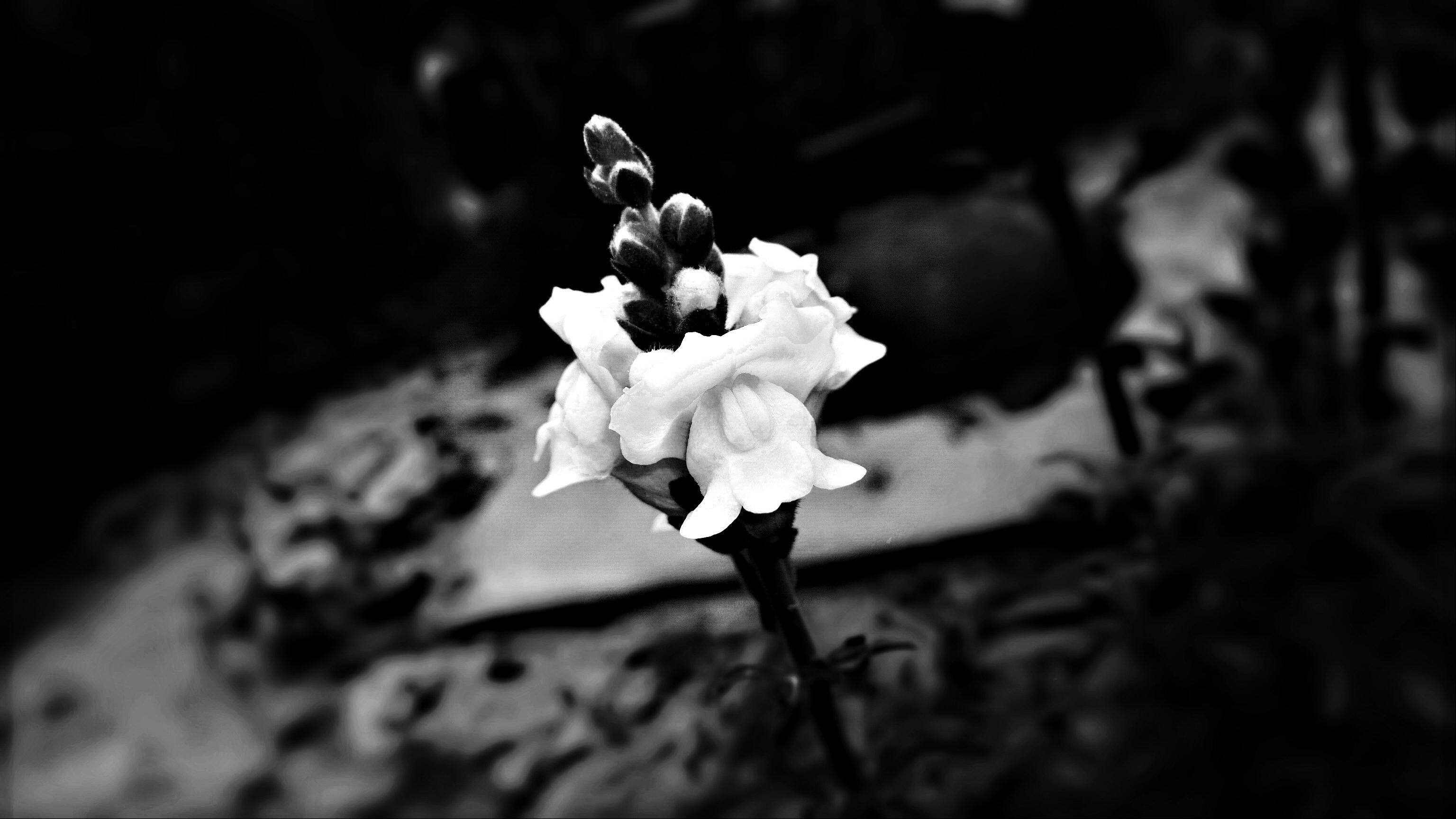 Earth Flower 3072x1728