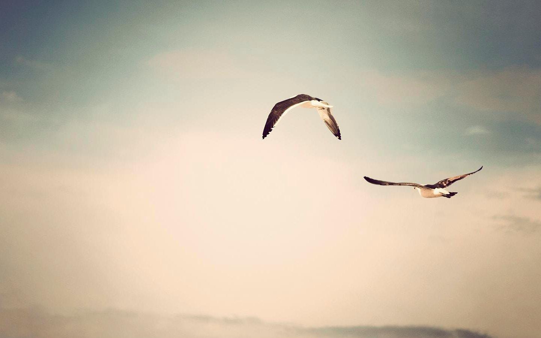 Animal Bird 1440x900
