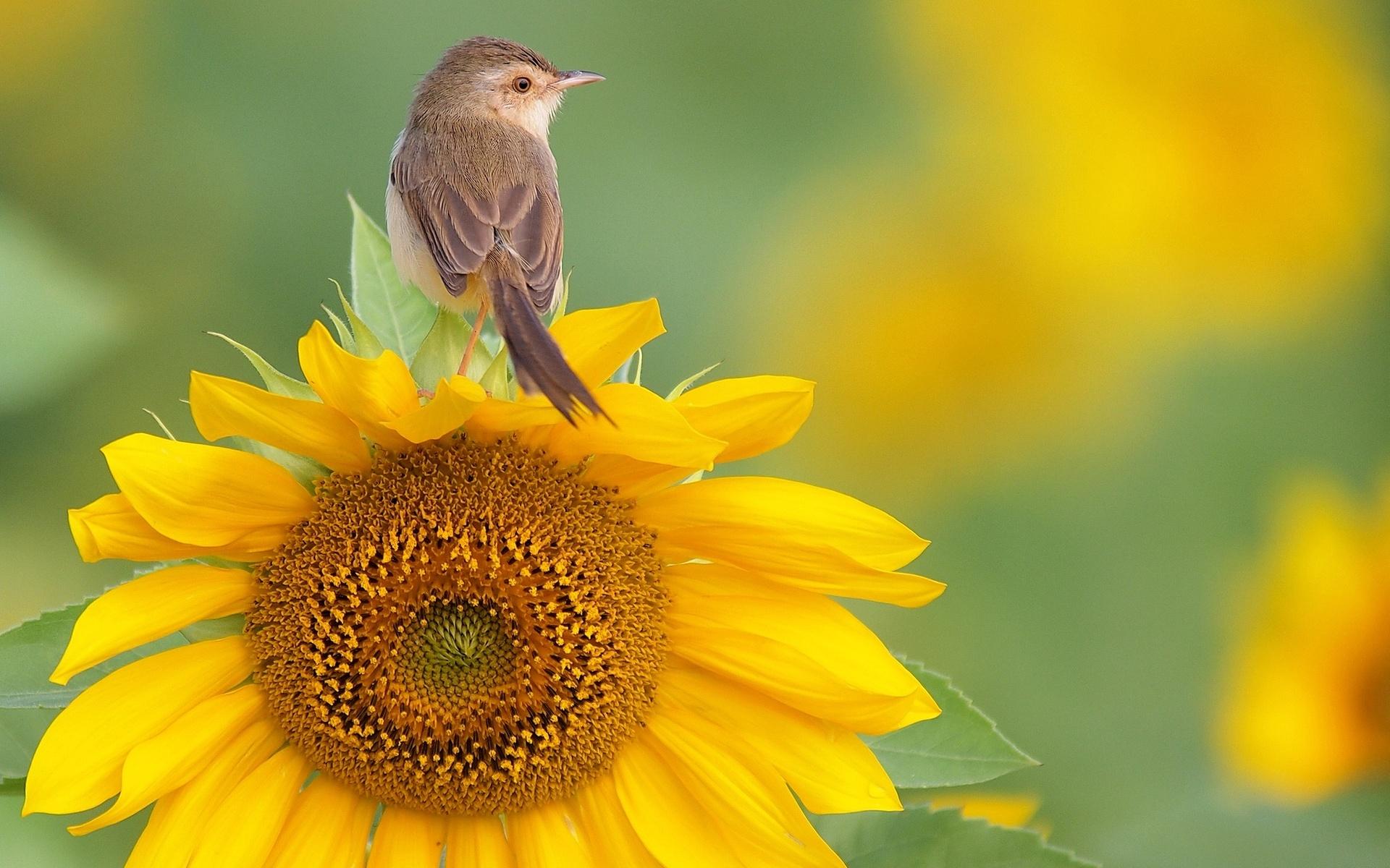 Animal Bird 1920x1200