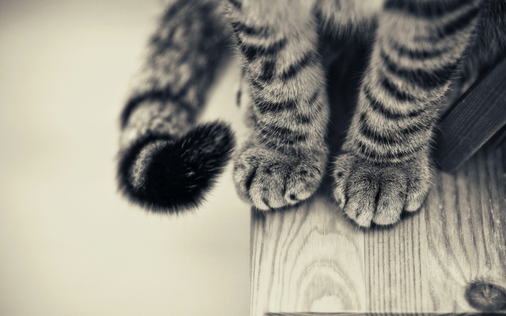 Cat Paw Tabby Cat 1920x1200