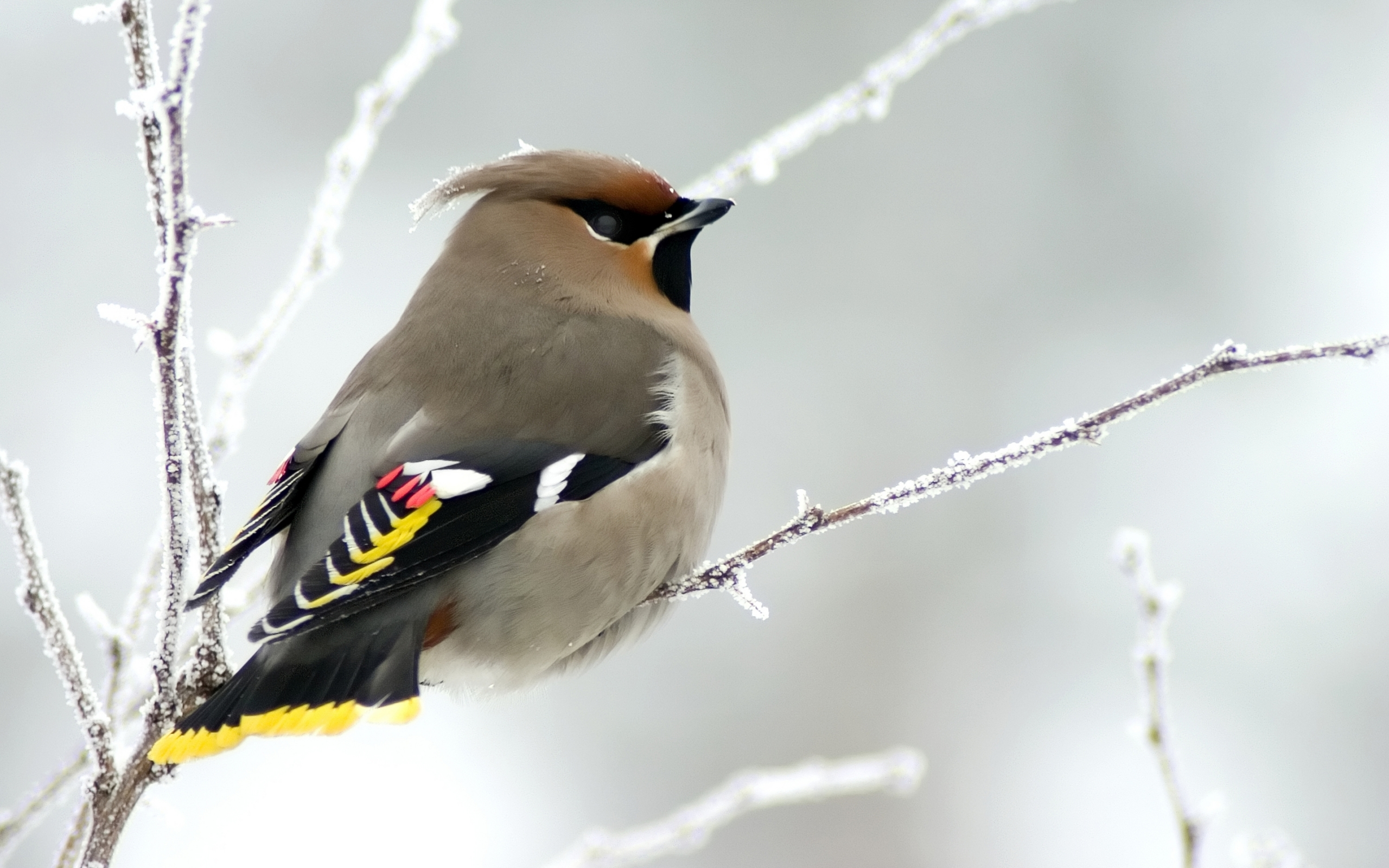 Bird 2560x1600
