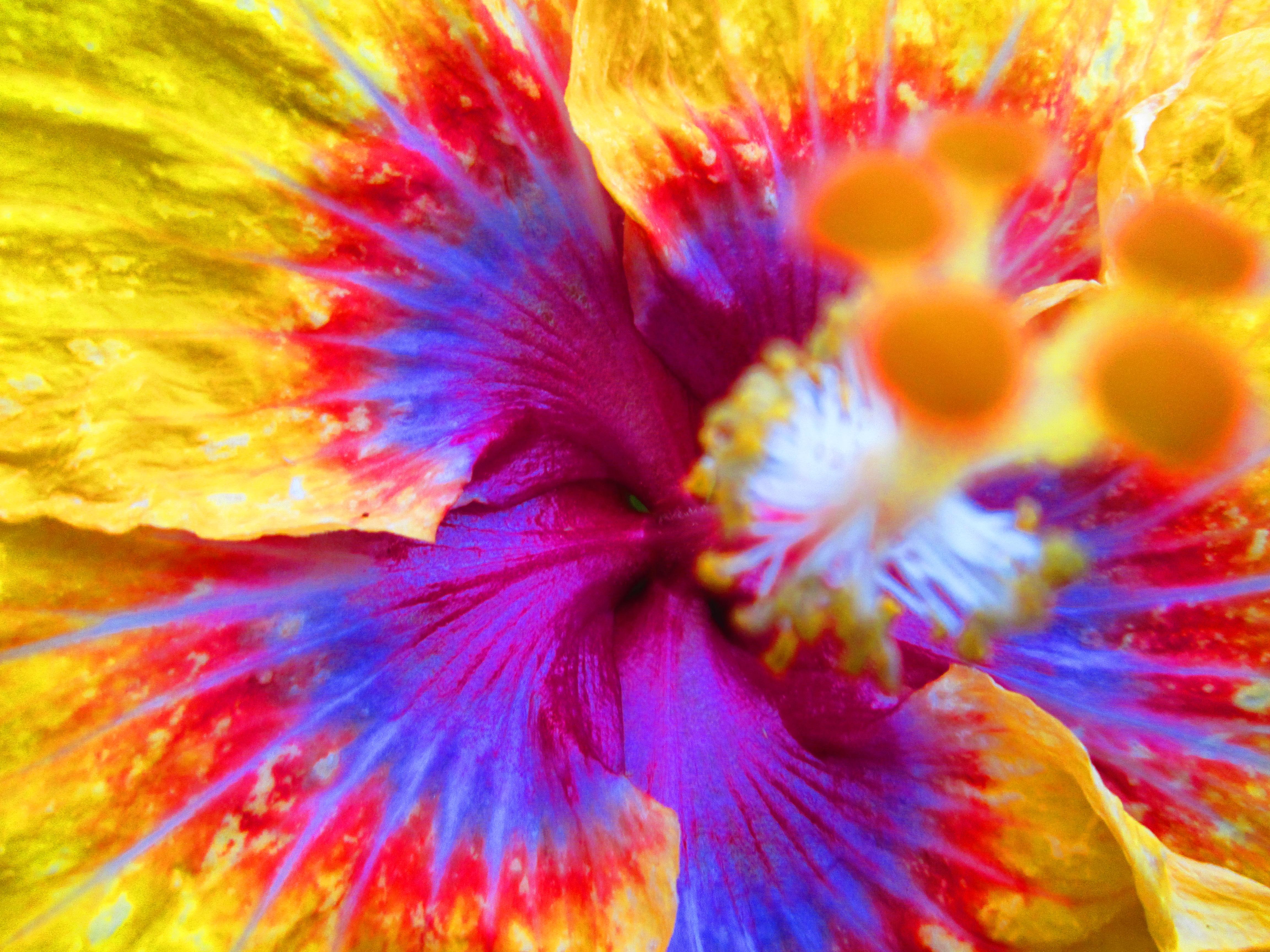 Flower Colors 4608x3456