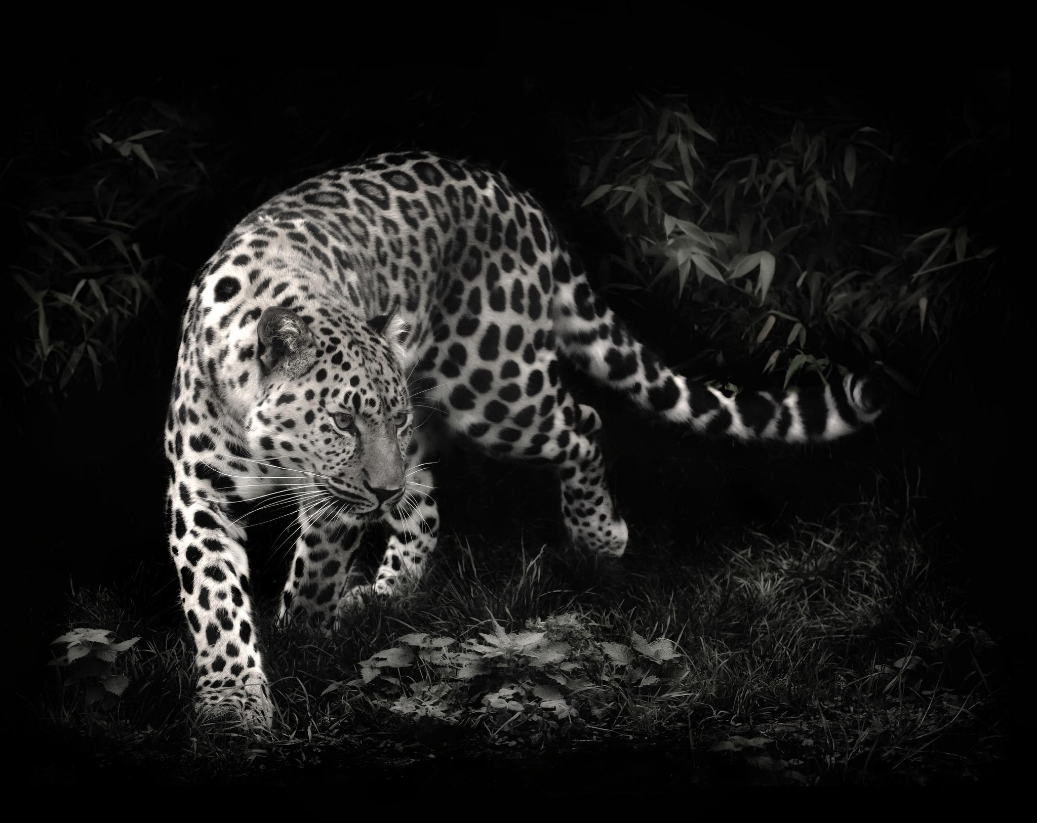 Animal Leopard 2048x1626
