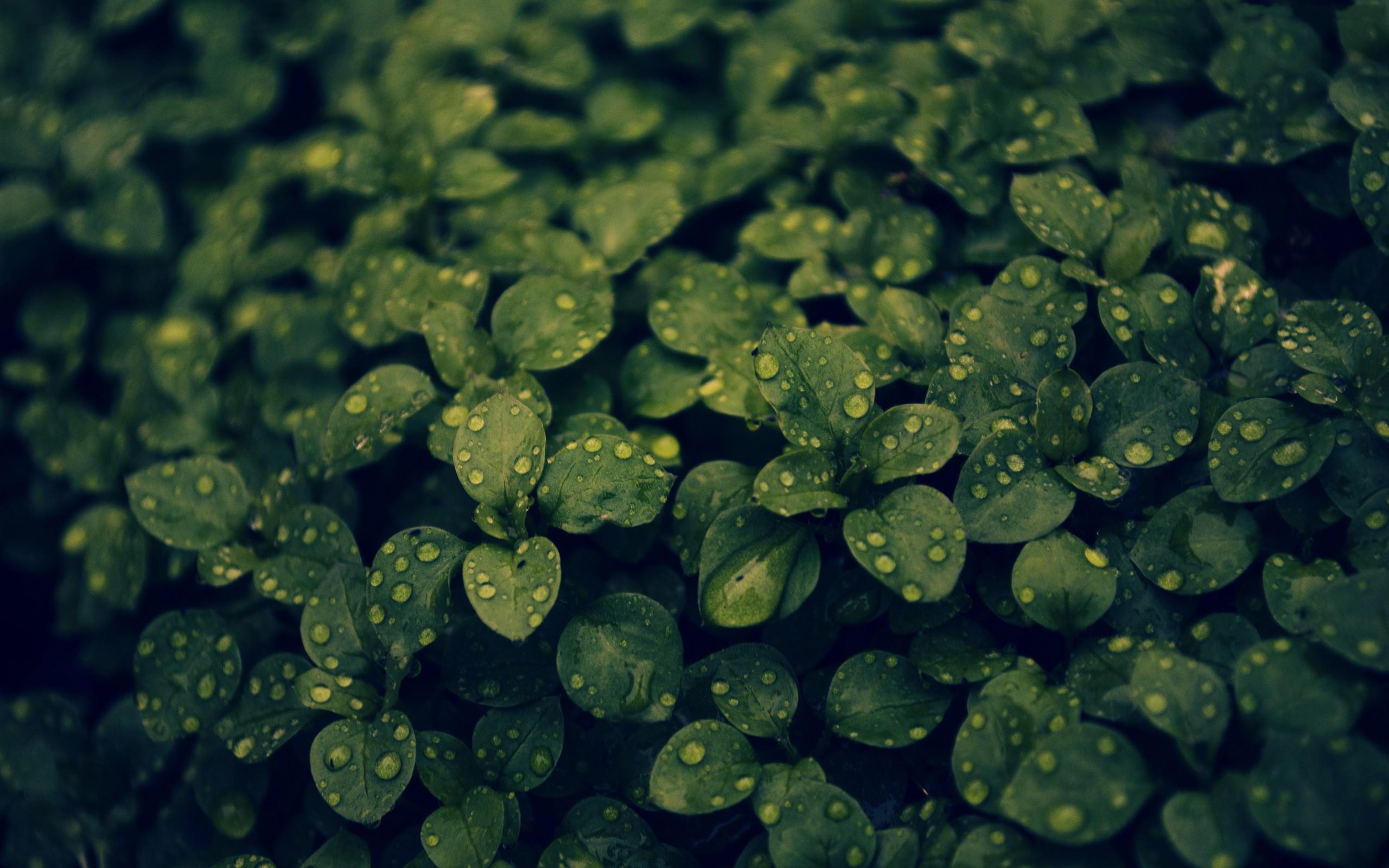 Macro Water Drop Plant Leaf 2560x1600