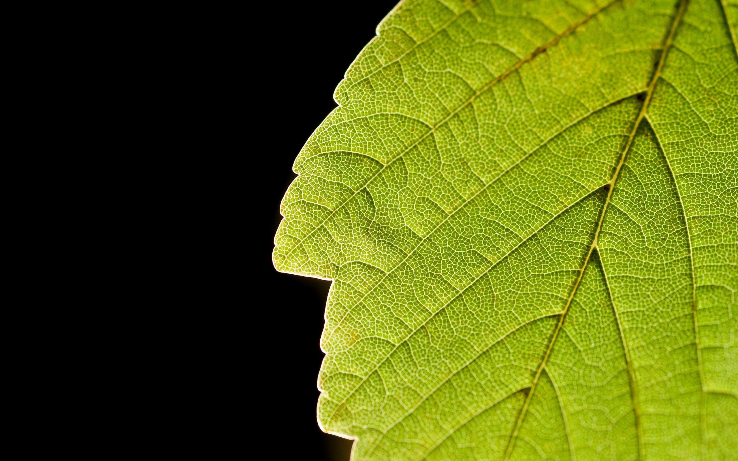 Plants Macro Leaves 2560x1600