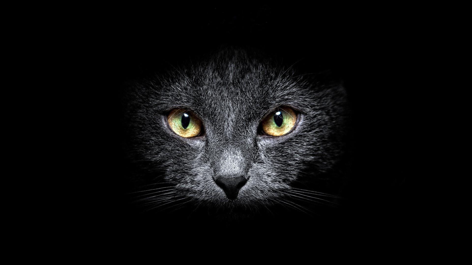 Animal Cat 1920x1080