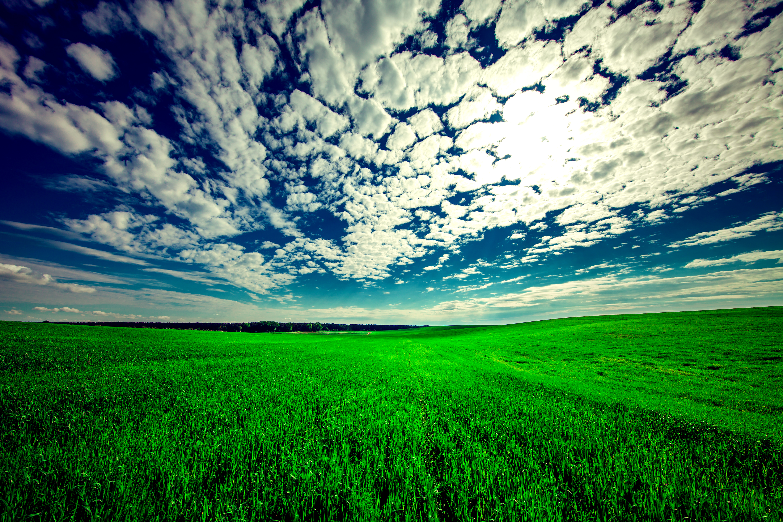 Sky Cloud Field Grass Landscape 5296x3532