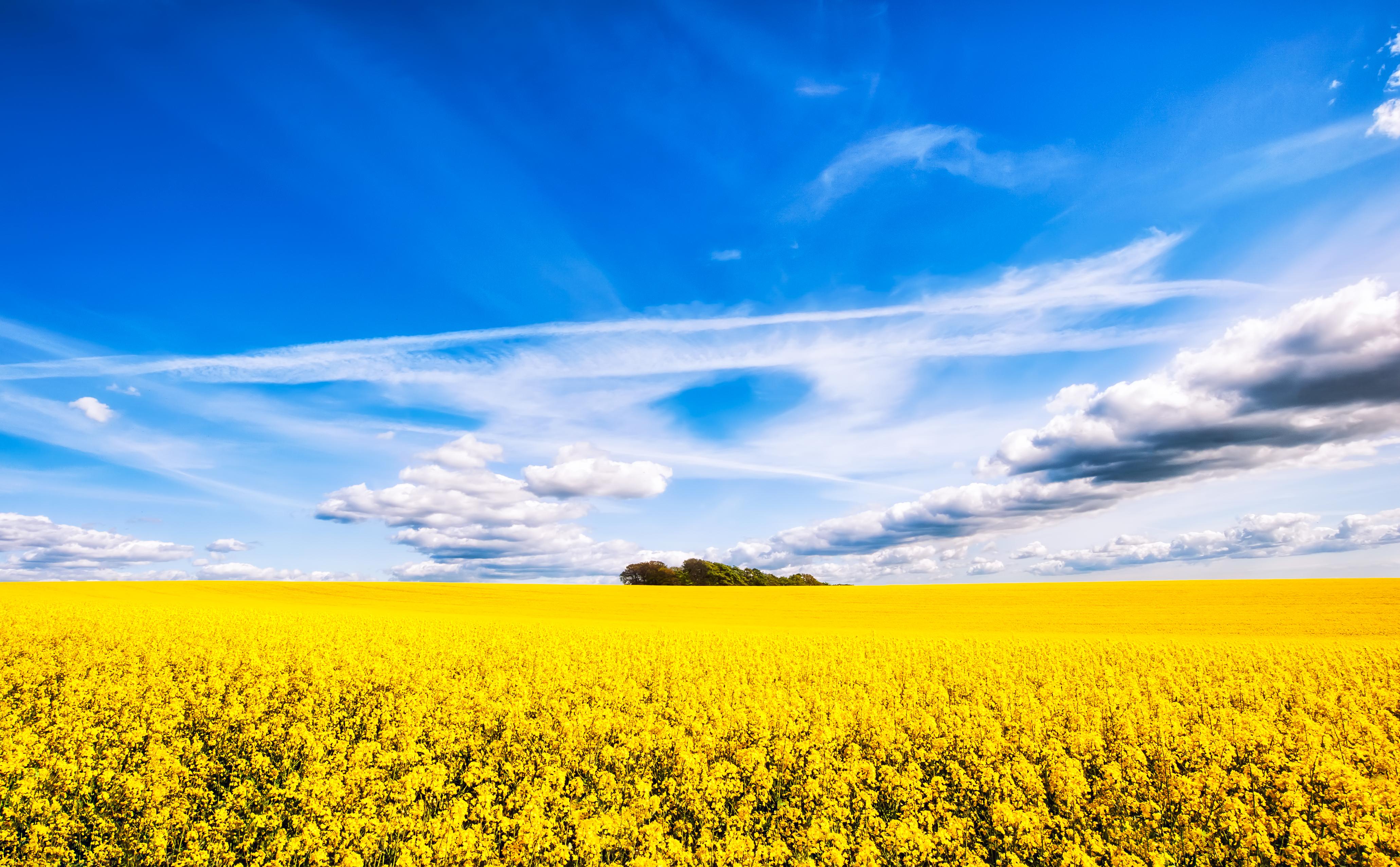 Field Nature Cloud Sky Horizon Flower Yellow Flower Rapeseed Summer 4122x2553
