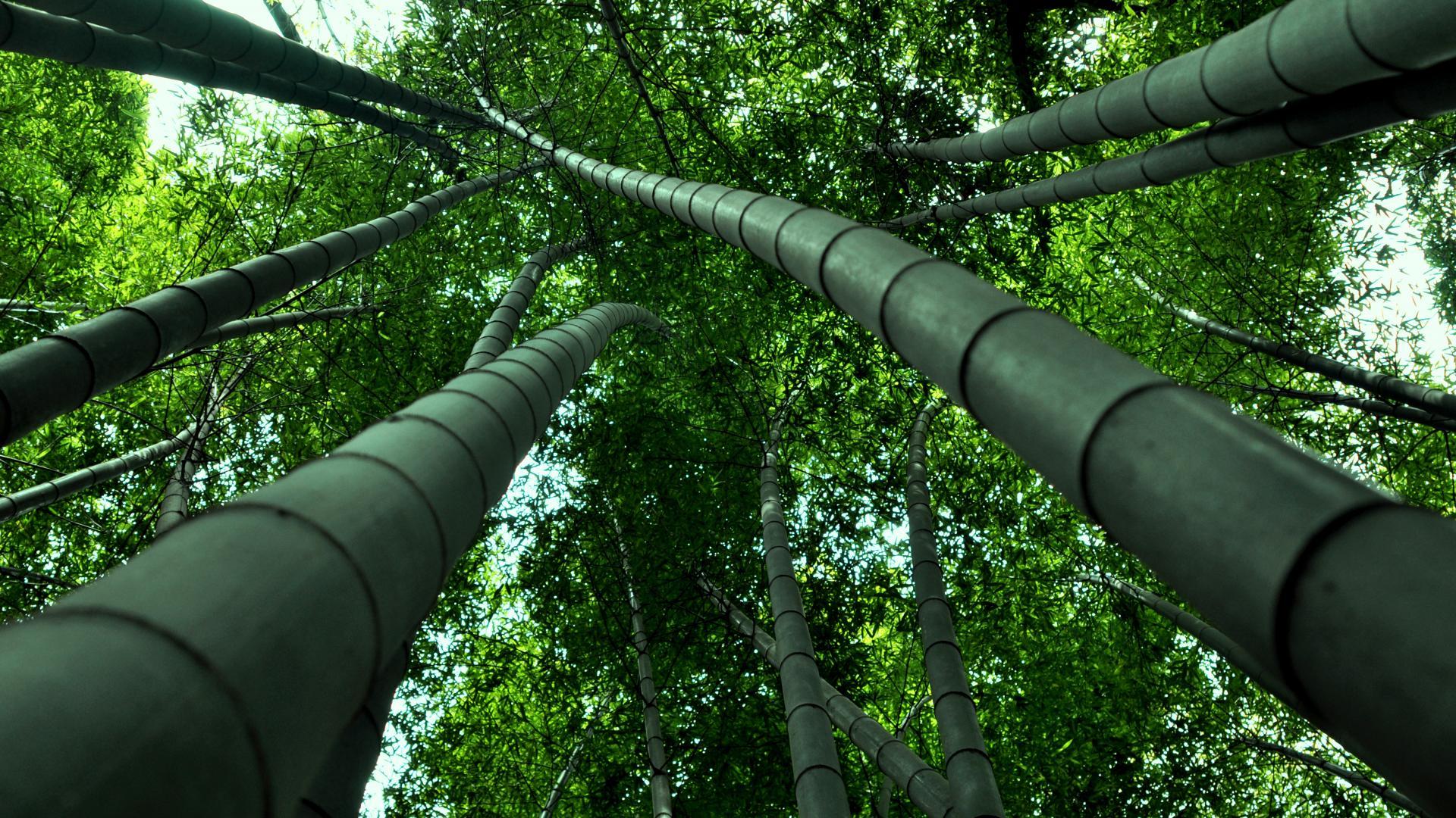 Earth Bamboo 1920x1080