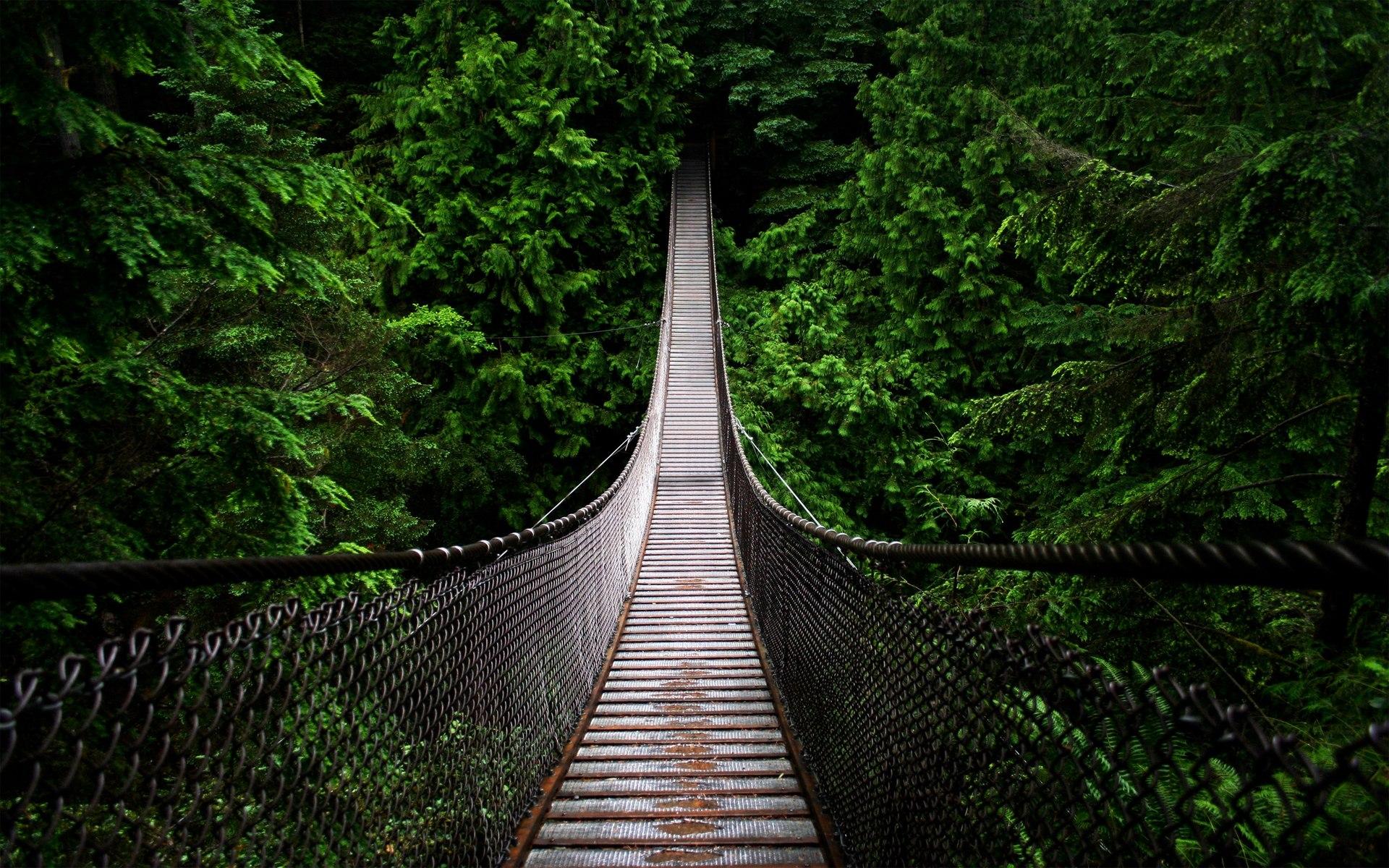 Nature Trees Forest Bridge North 1920x1200