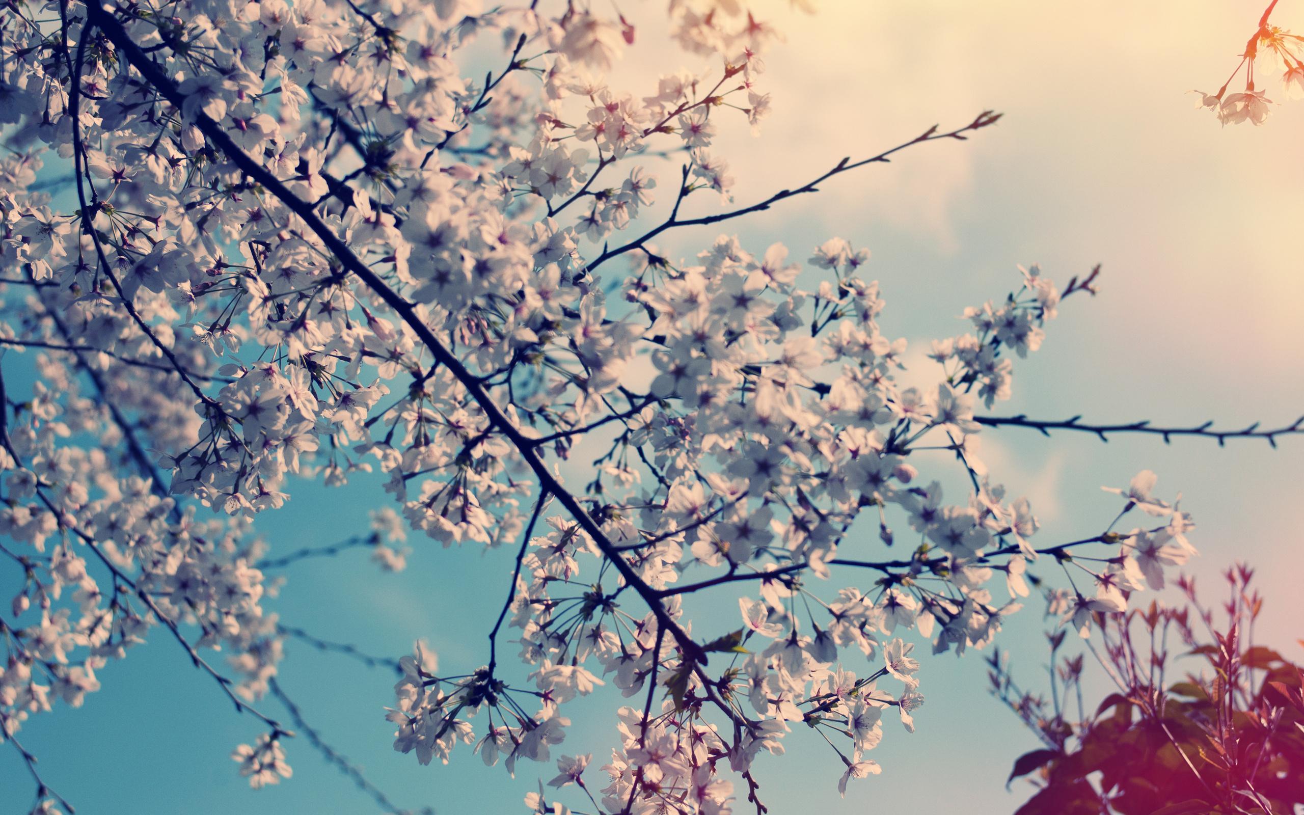 Earth Blossom 2560x1600