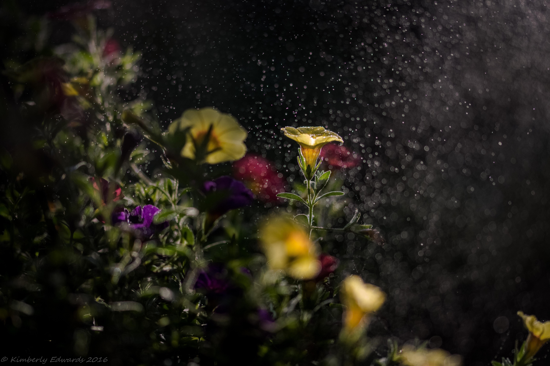 Flower Macro Bokeh Yellow Flower 6000x4000