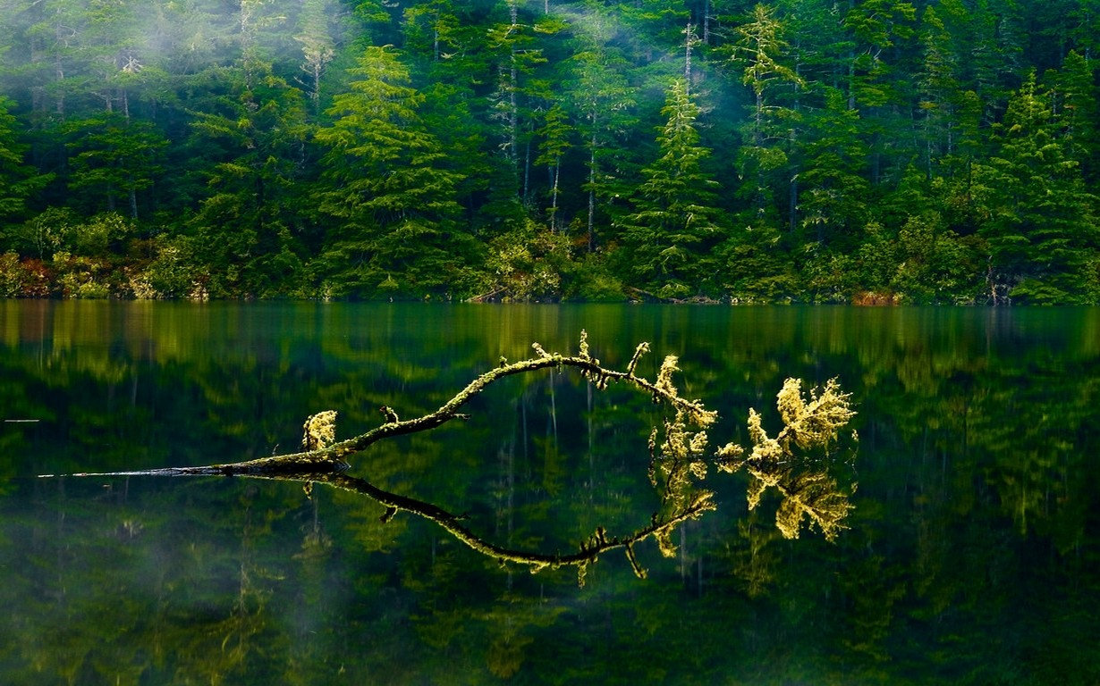 Nature Landscape Oregon Lake Mist Forest Green Water Trees Branch Spring Foliage 1230x768