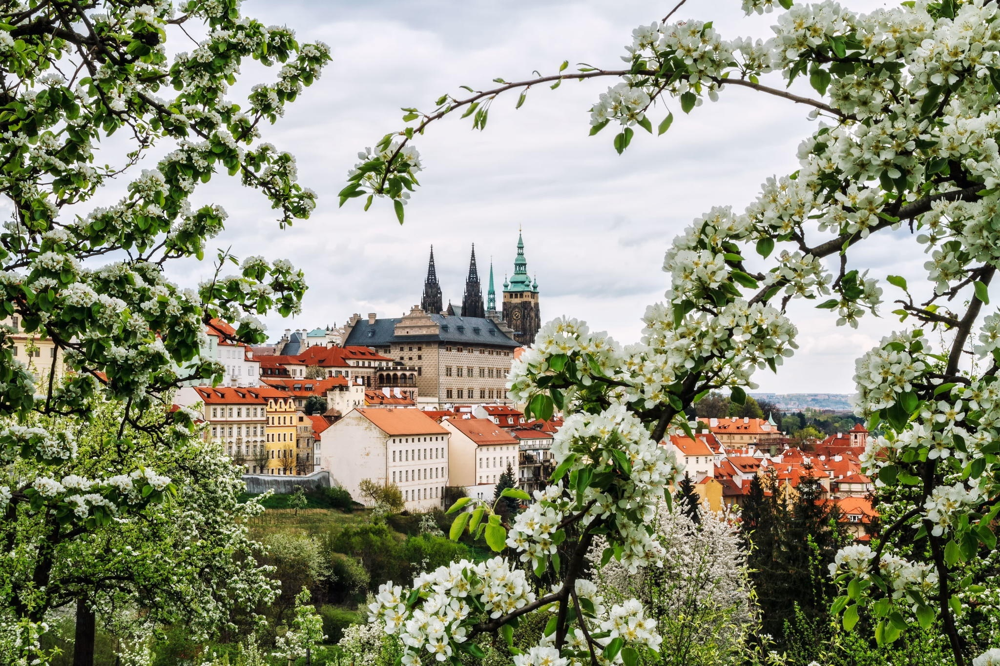 Czech Republic Prague City Spring Flower Branch White Flower 2048x1365